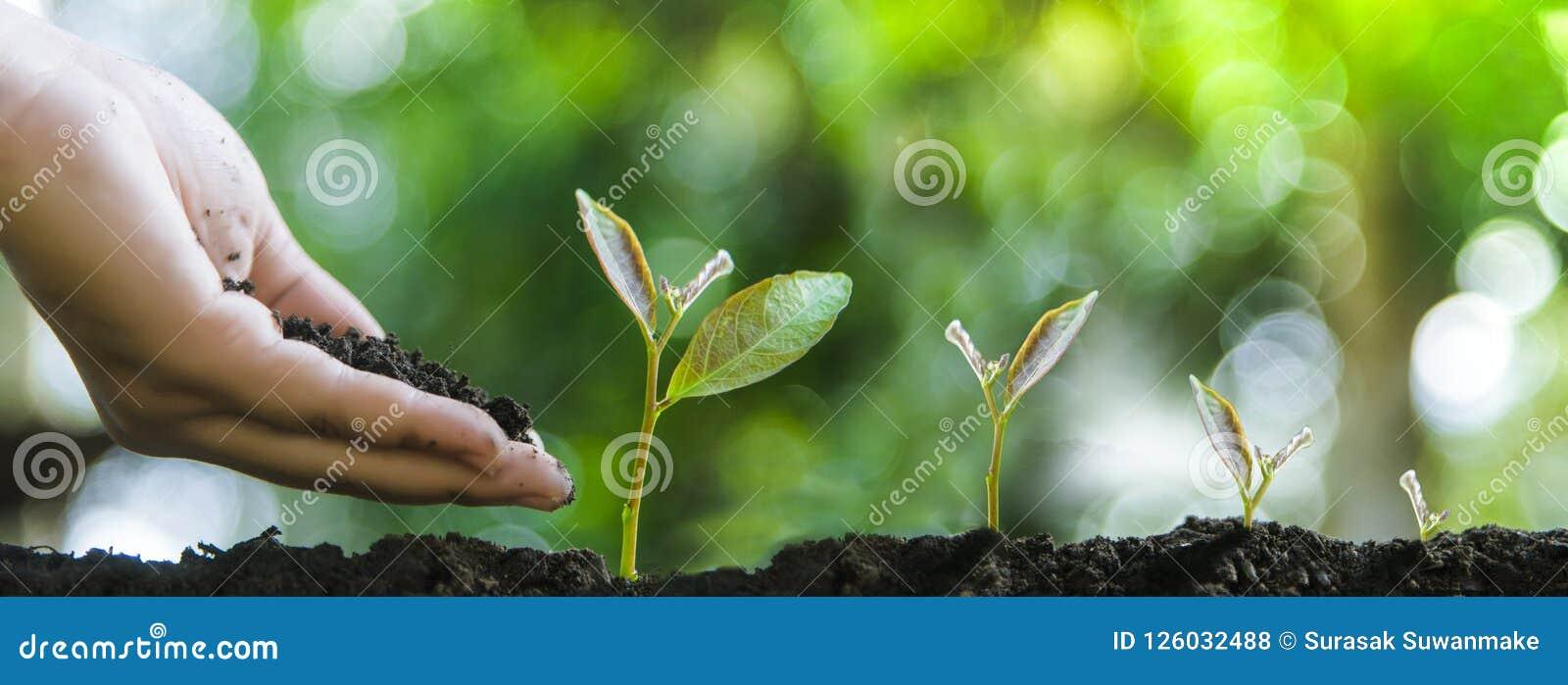 成长和环境保护树或者自然维护的生长树
