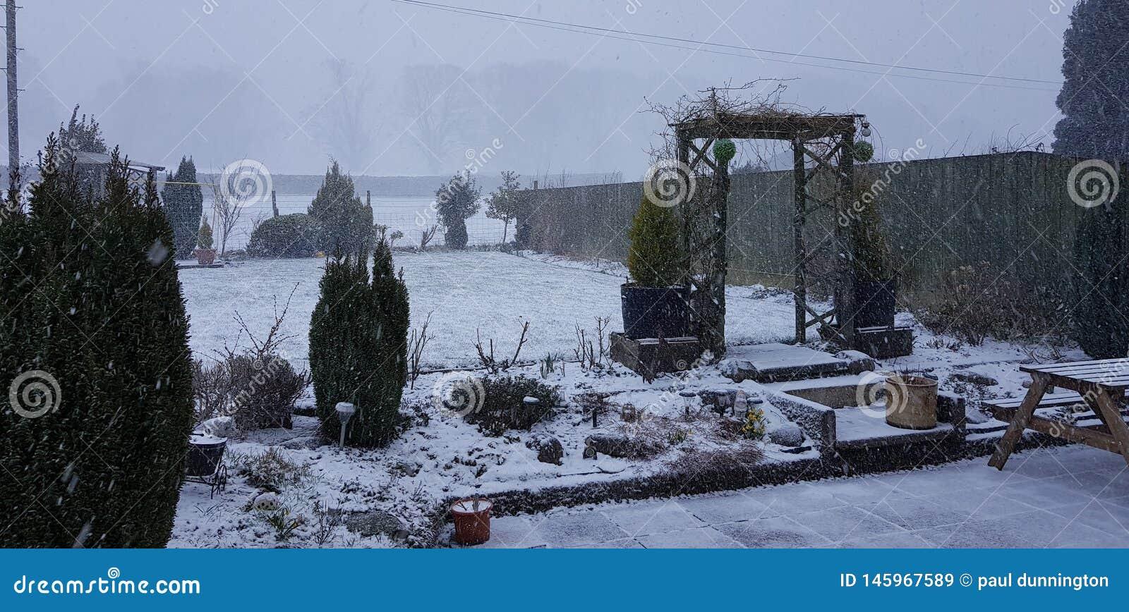 我们的家庭庭院花、树、草和雪