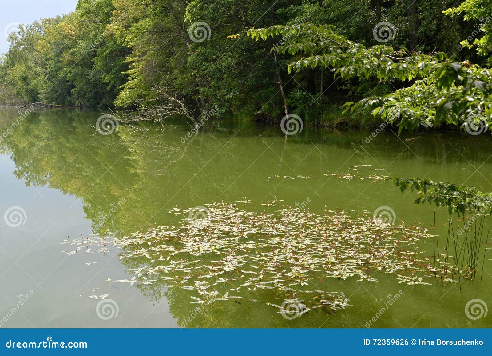 我保护了湖,长满与木头