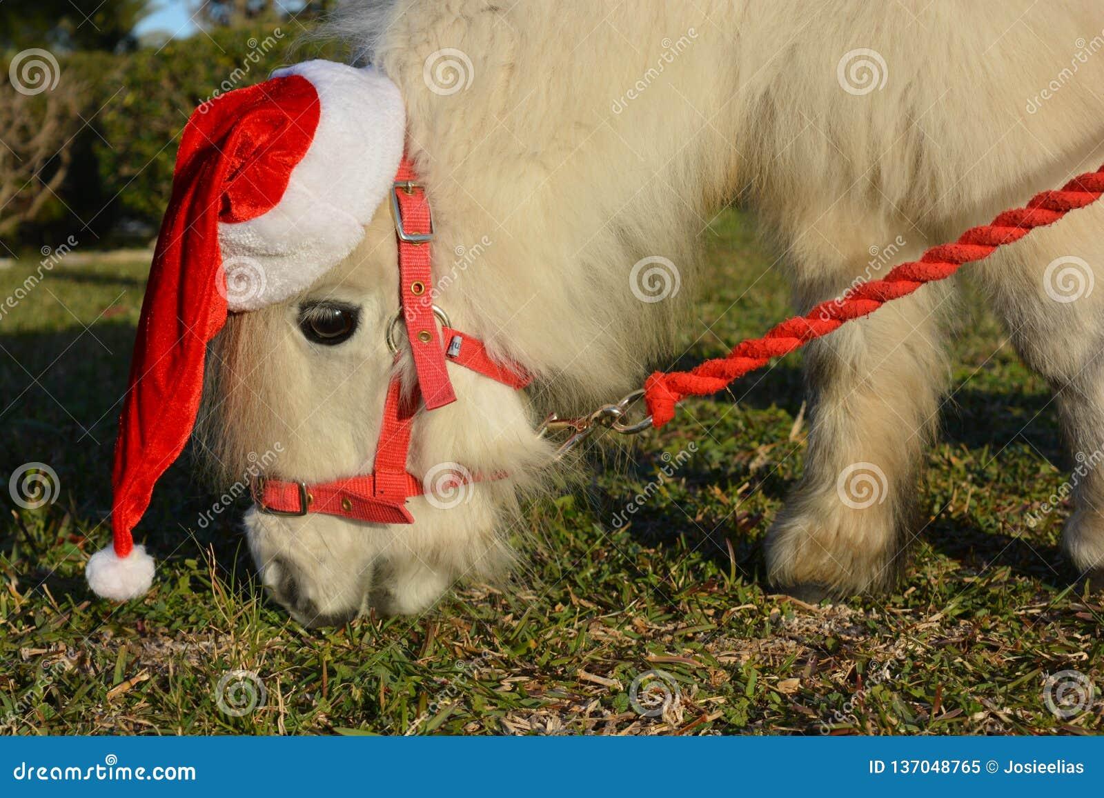 戴圣诞老人帽子的逗人喜爱的小的马