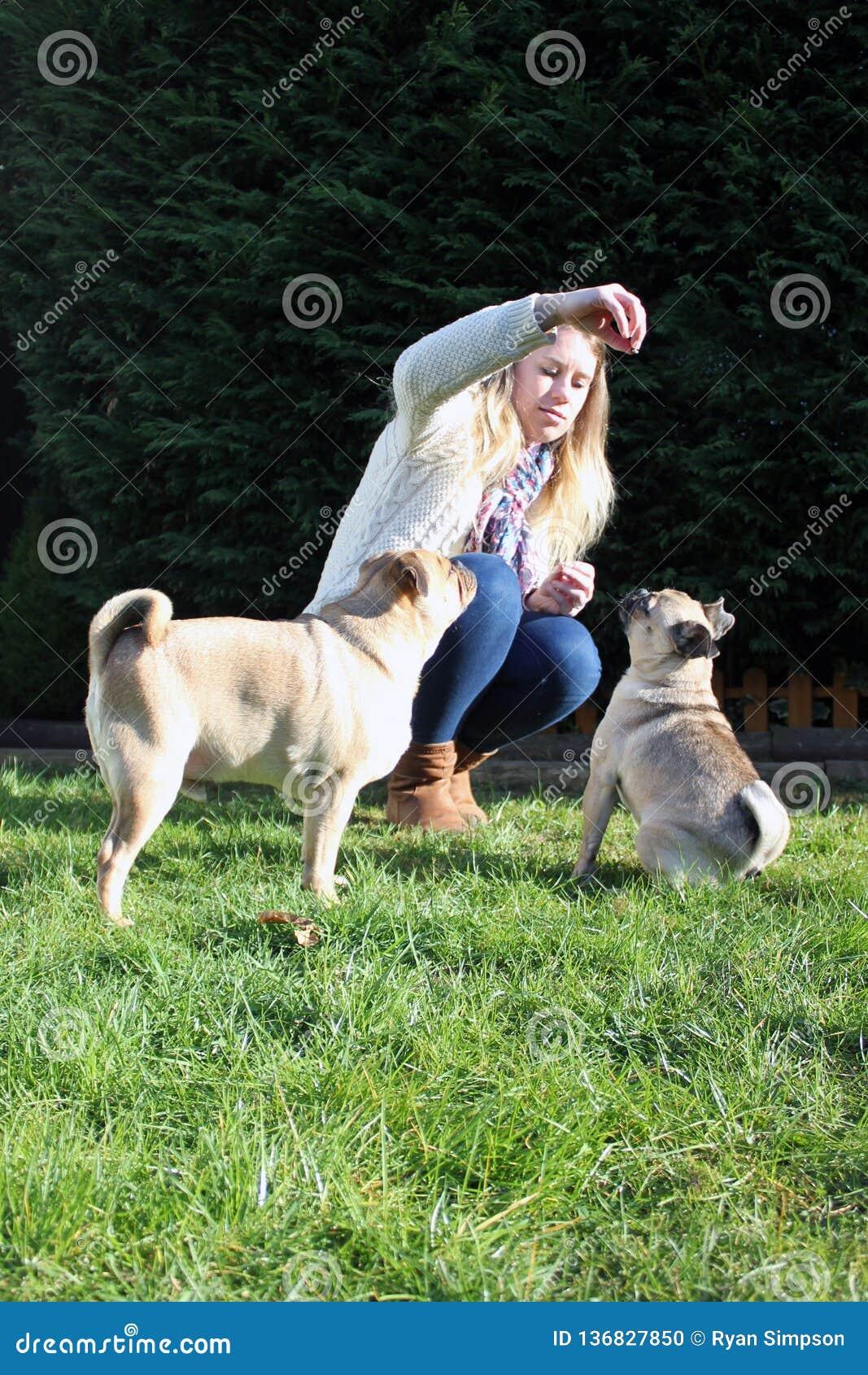 所有者被训练的狗