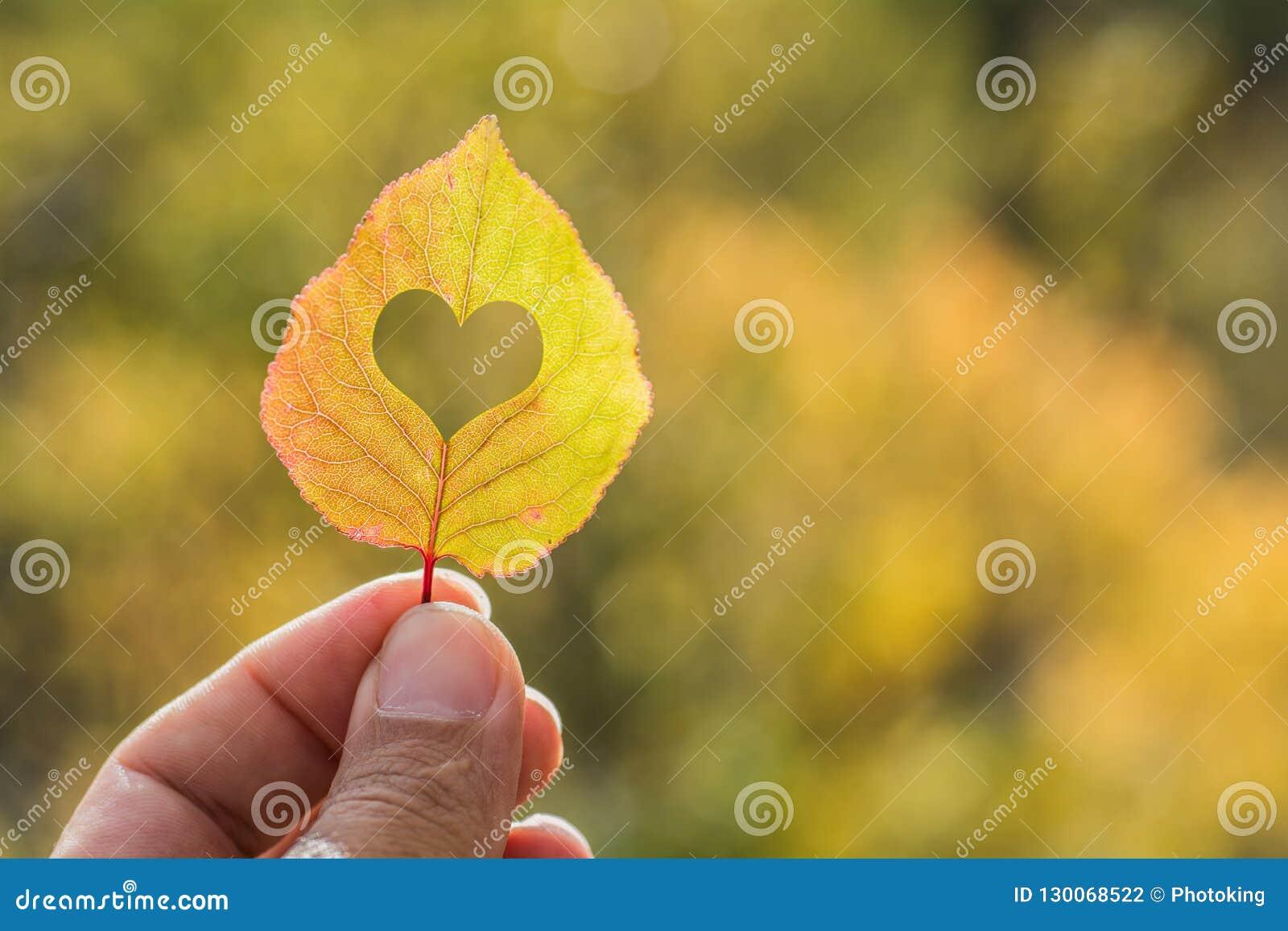 手中秋天黄色的叶子