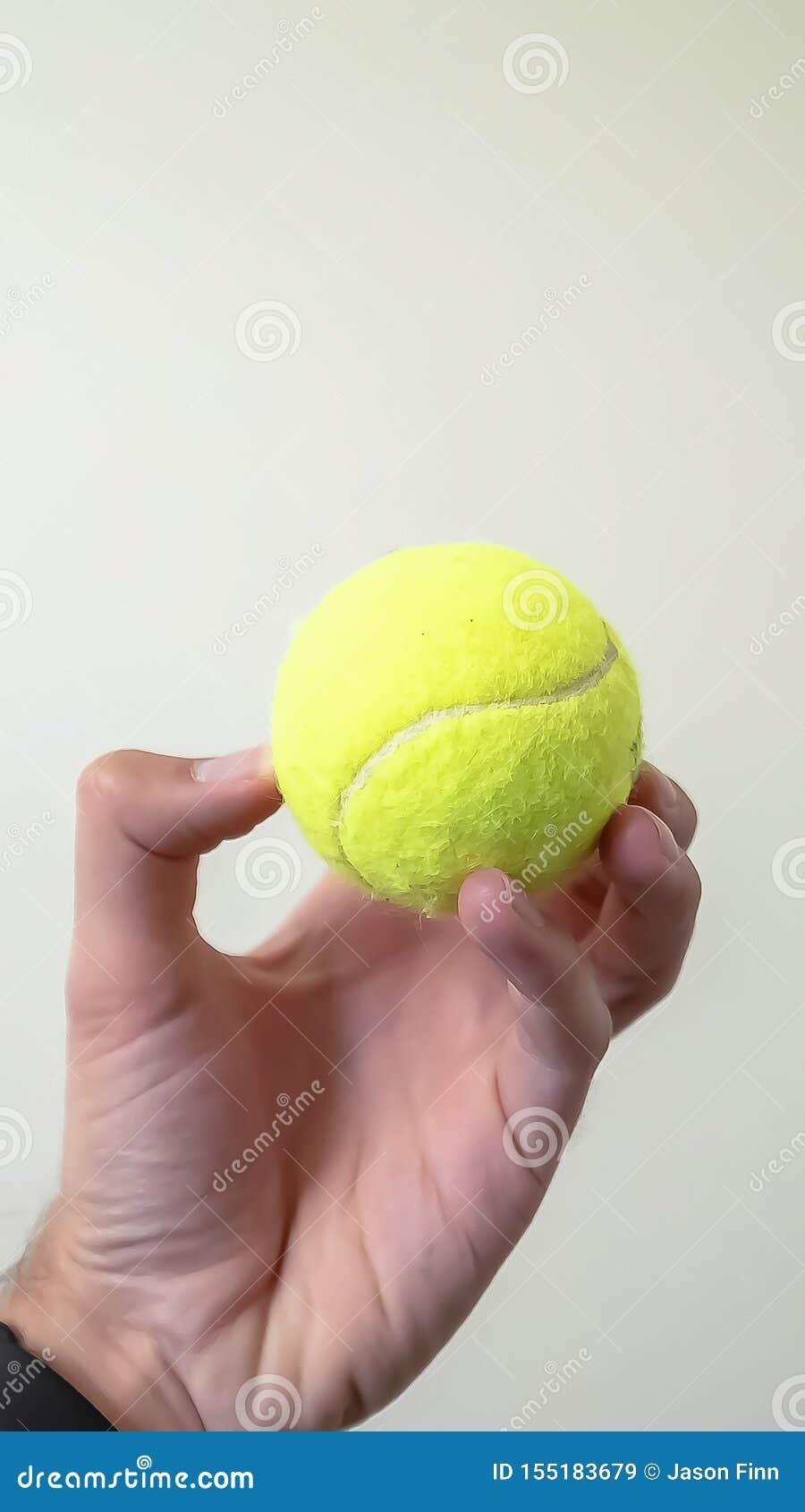 手举行的垂直的小球被隔绝对白色墙壁和天花板背景