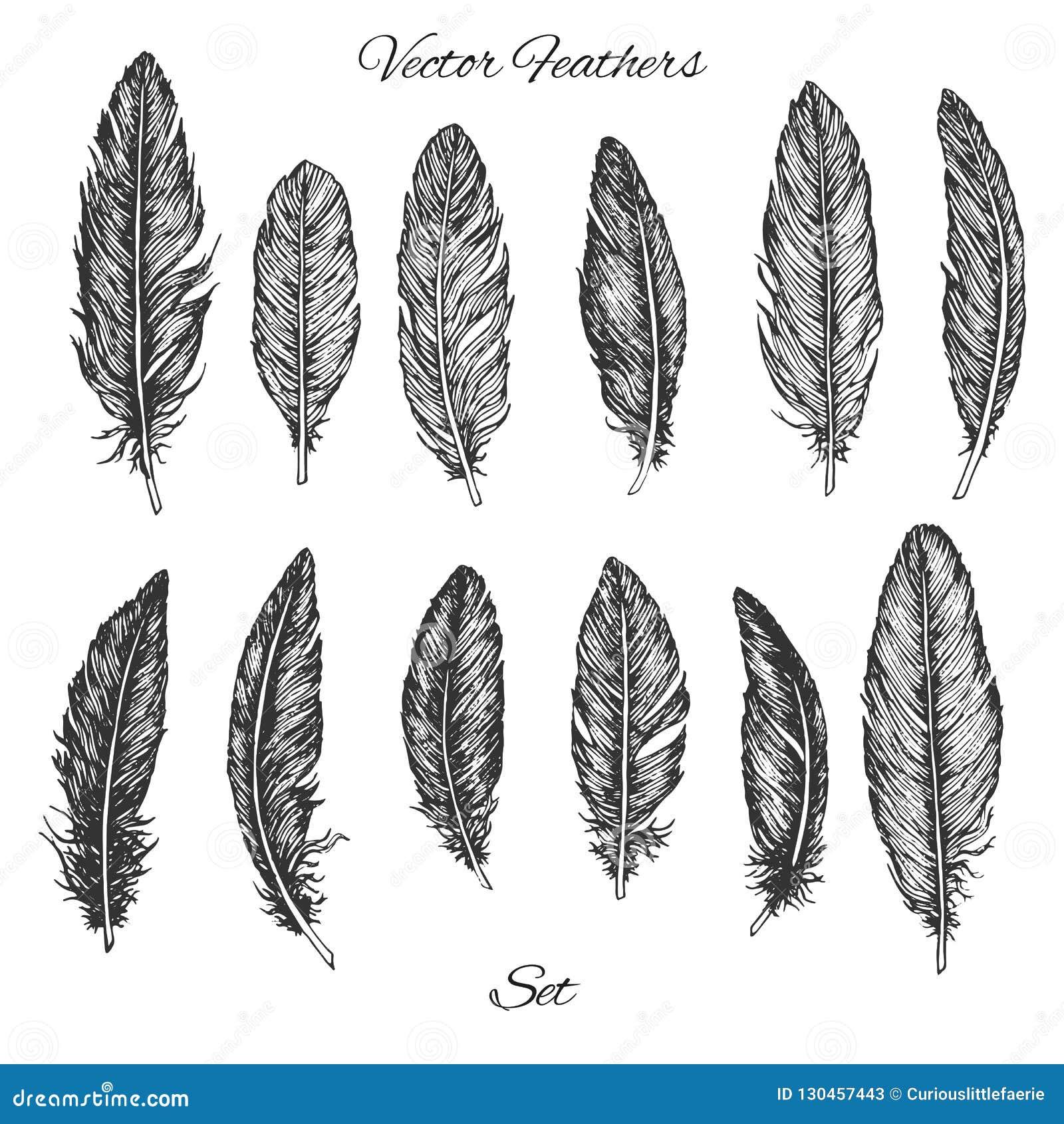 手拉的传染媒介羽毛在白色背景设置了被隔绝 详细的boho装饰元素