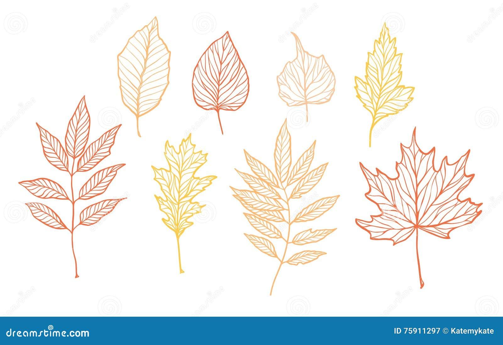 手拉的传染媒介例证 套秋天叶子 森林desi
