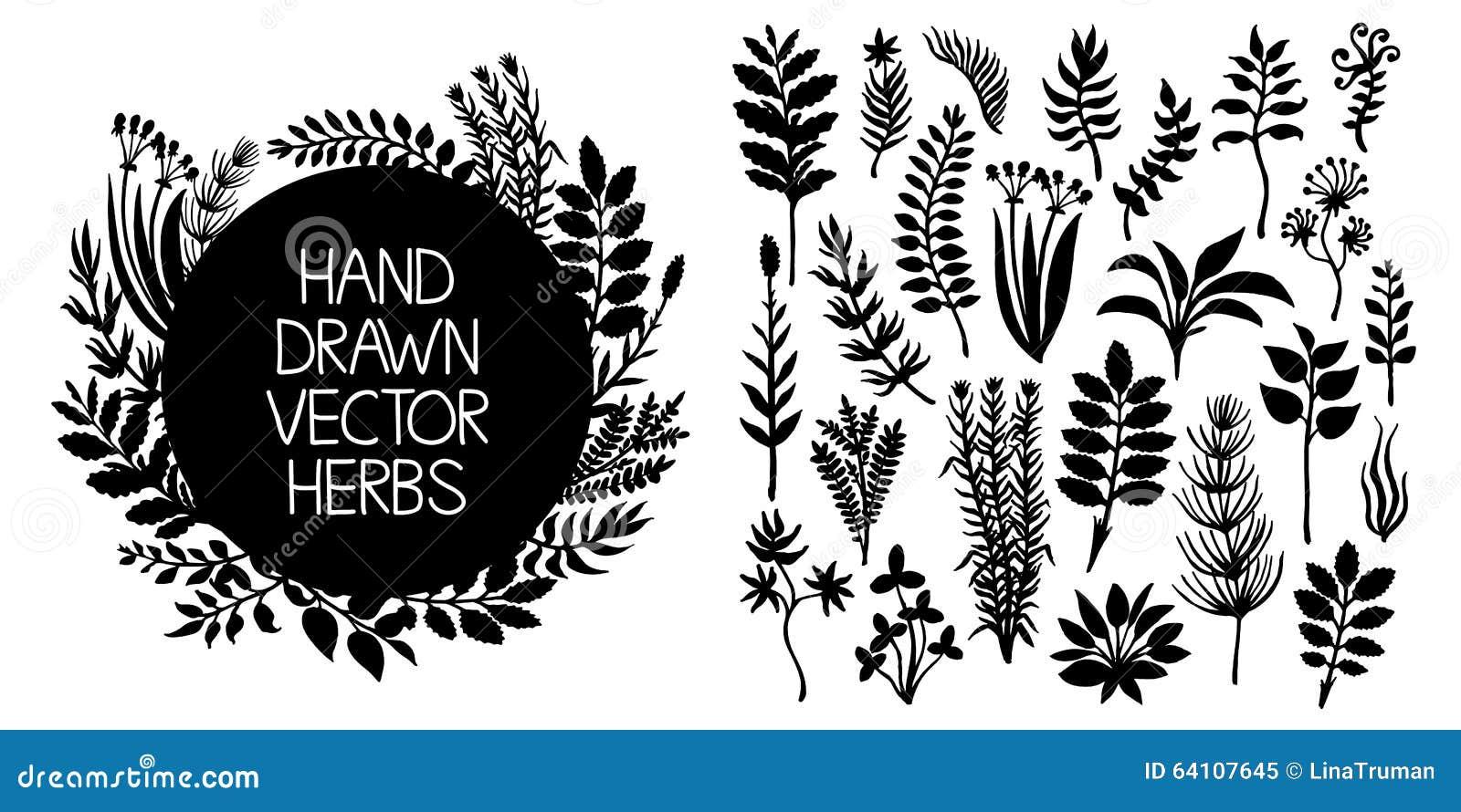 手拉的套草本和植物 容易的设计编辑要素导航