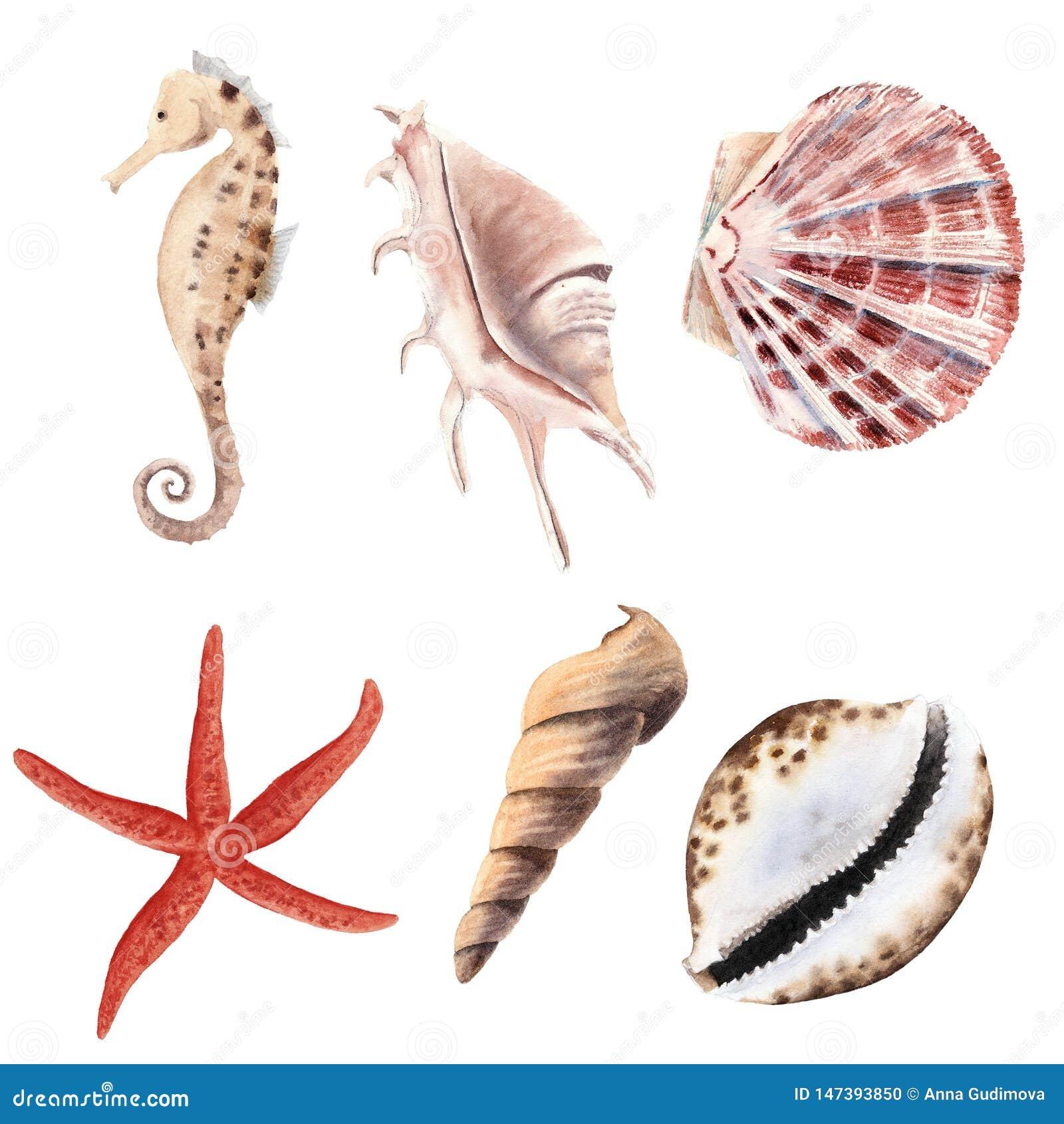 手拉的水彩设置与壳、海星和被隔绝的海马