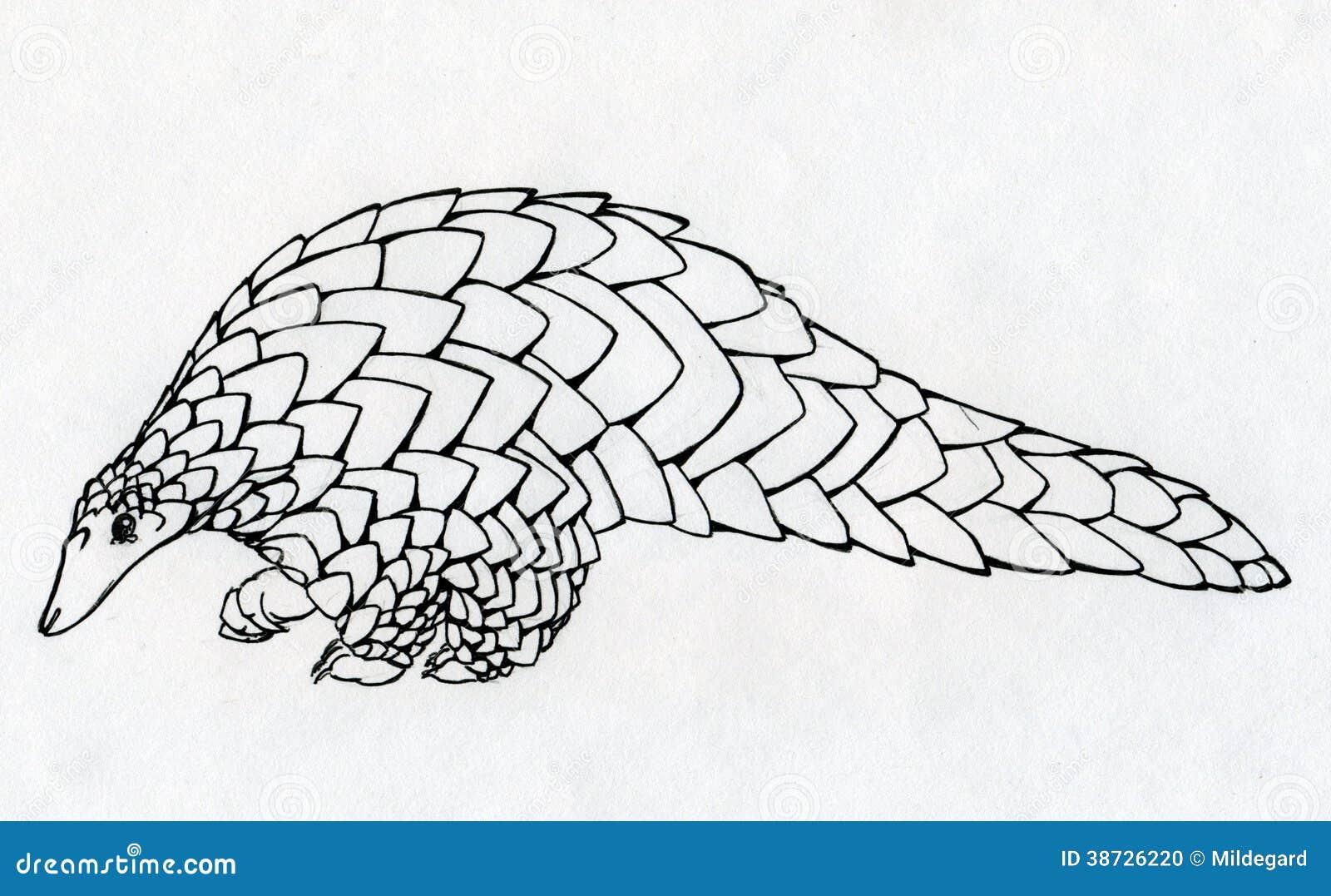 手拉的穿山甲等高 库存例证. 插画 包括有 墨水, 结构图片
