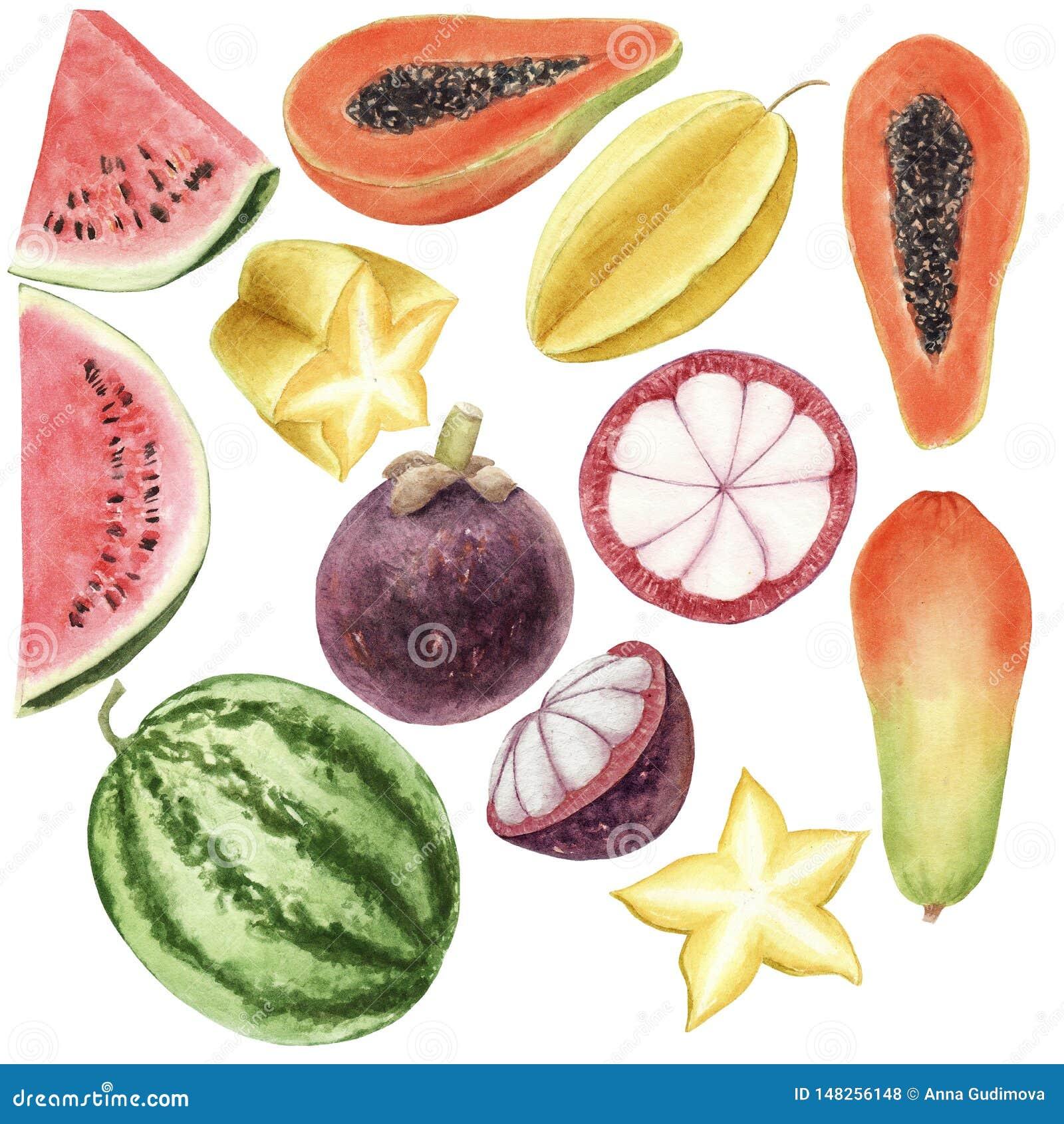 手拉的被隔绝的brigt五颜六色的水彩套热带水果
