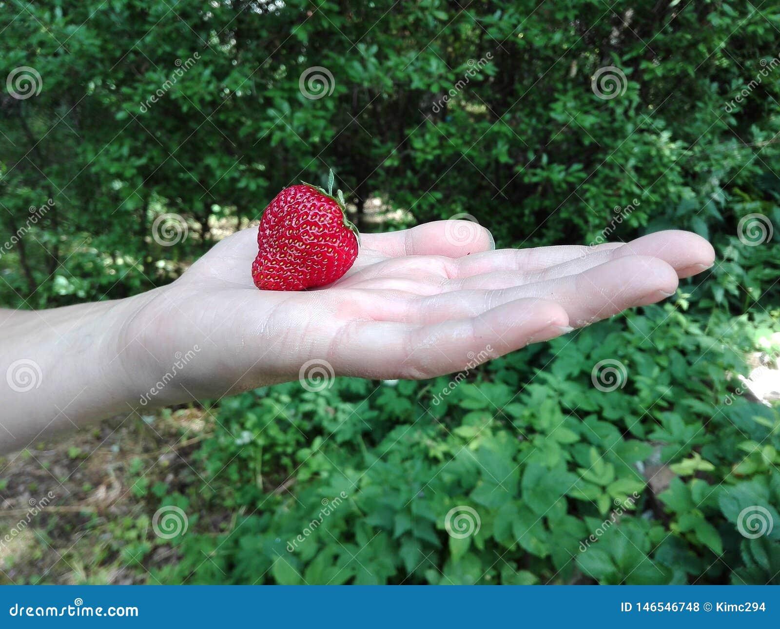 手拿着一个成熟草莓