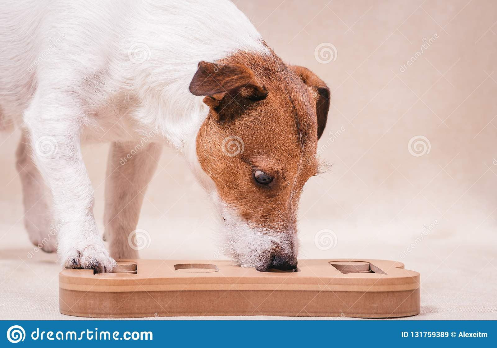 打嗅智力和nosework训练的狗难题比赛