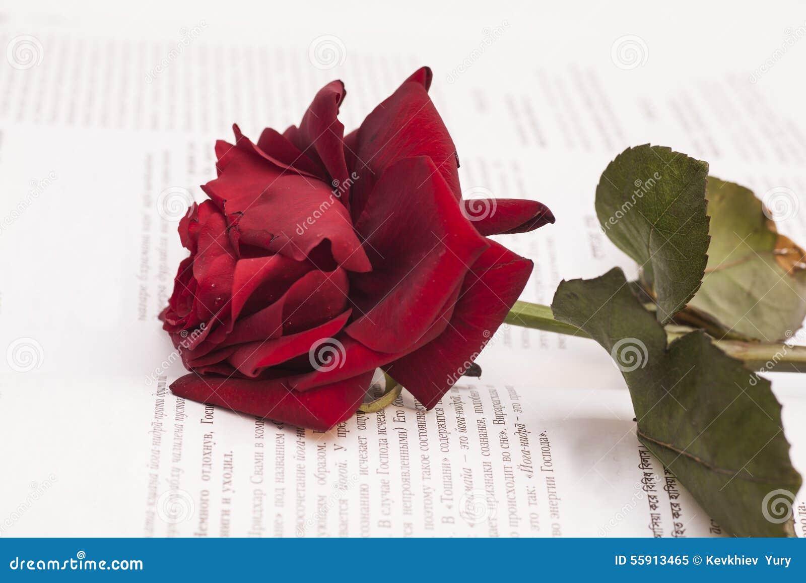 壁纸 花 花束 鲜花 桌面 1300_957图片