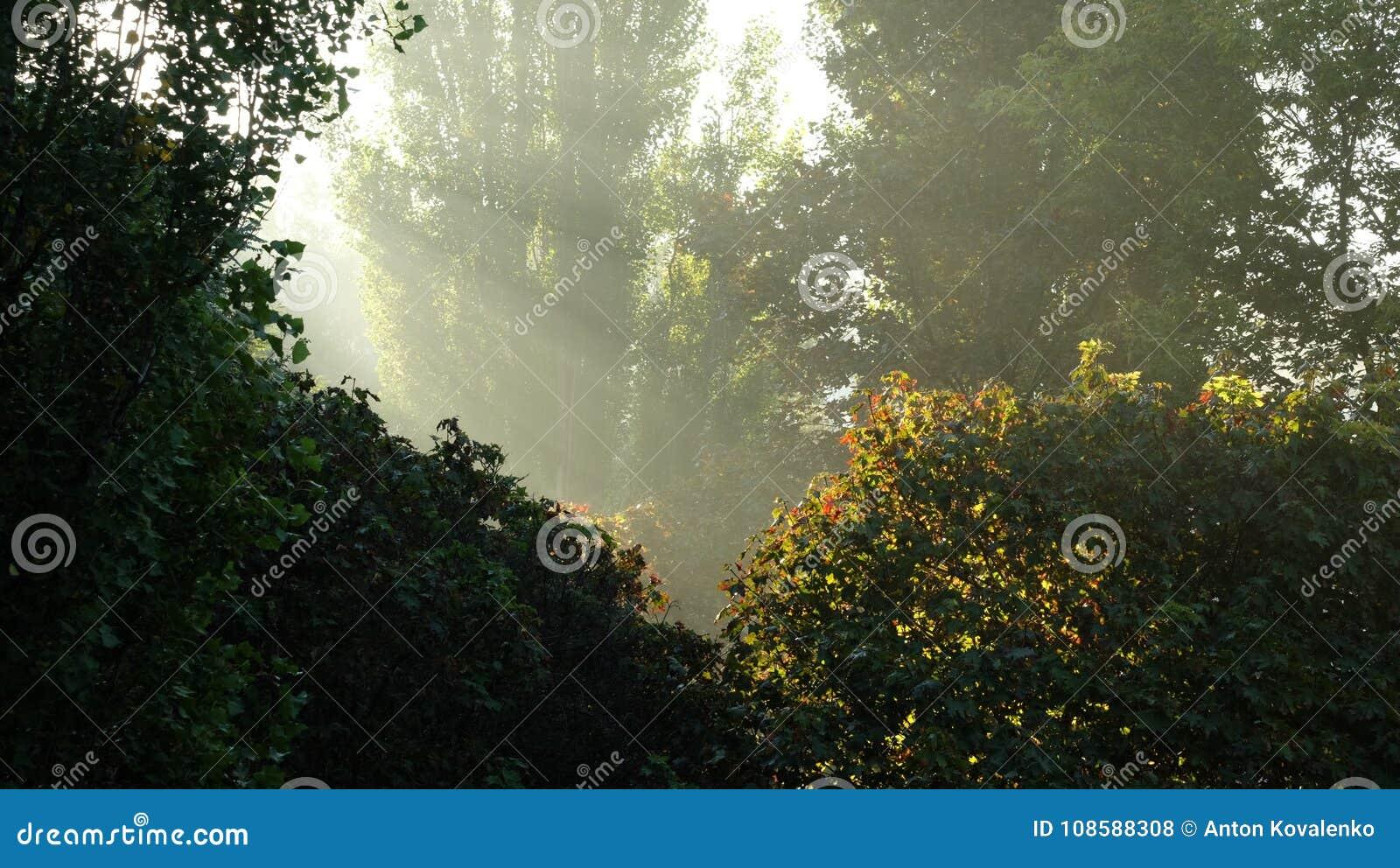 打破绿色丛林的阳光