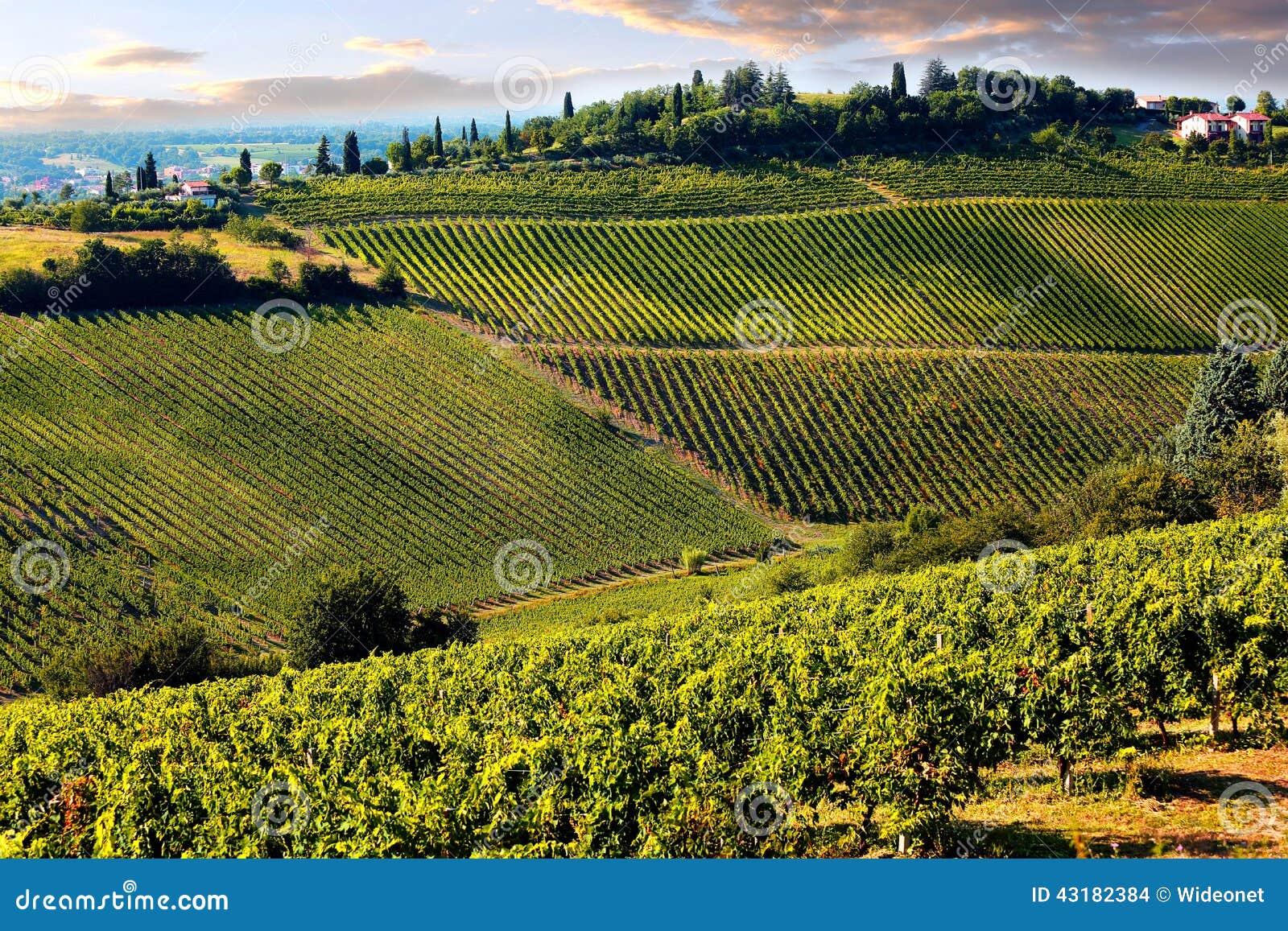 托斯卡纳的小山有葡萄园的