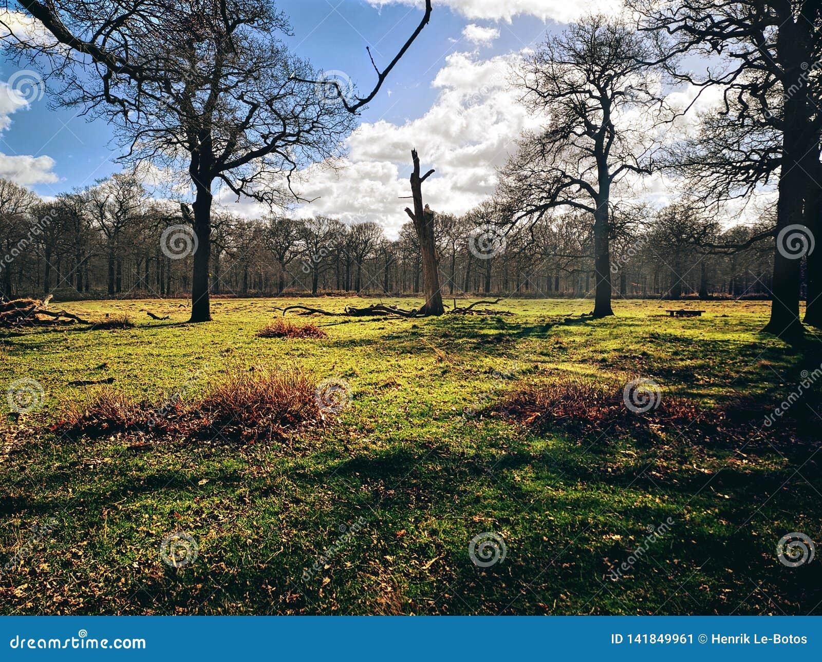 里士满公园,伦敦,英国