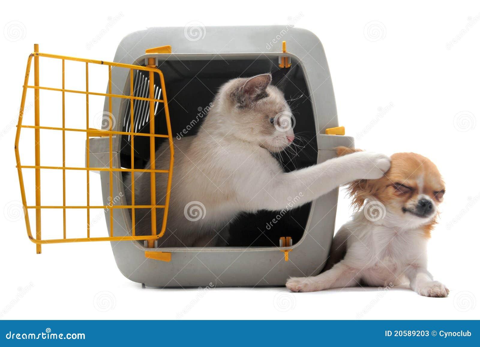 狗和人�y�'��)�al�����:)�h�_承运人奇瓦瓦狗小猫宠物