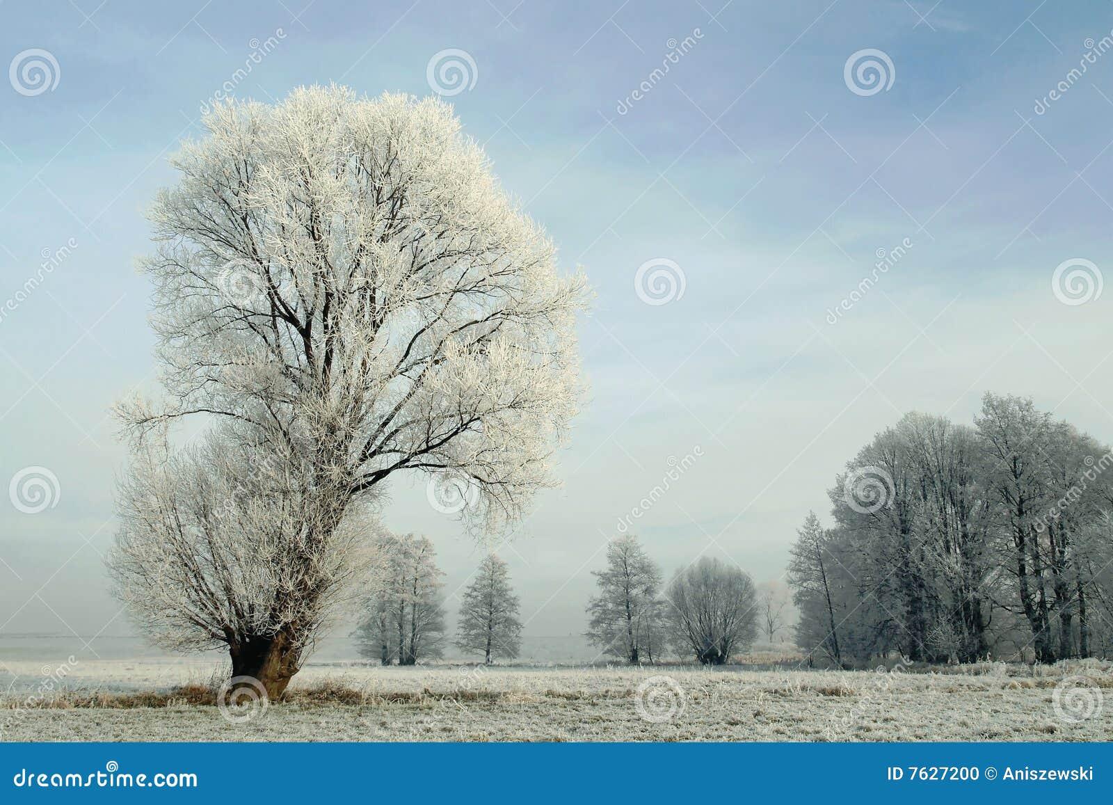 报道的霜横向多雪的结构树冬天