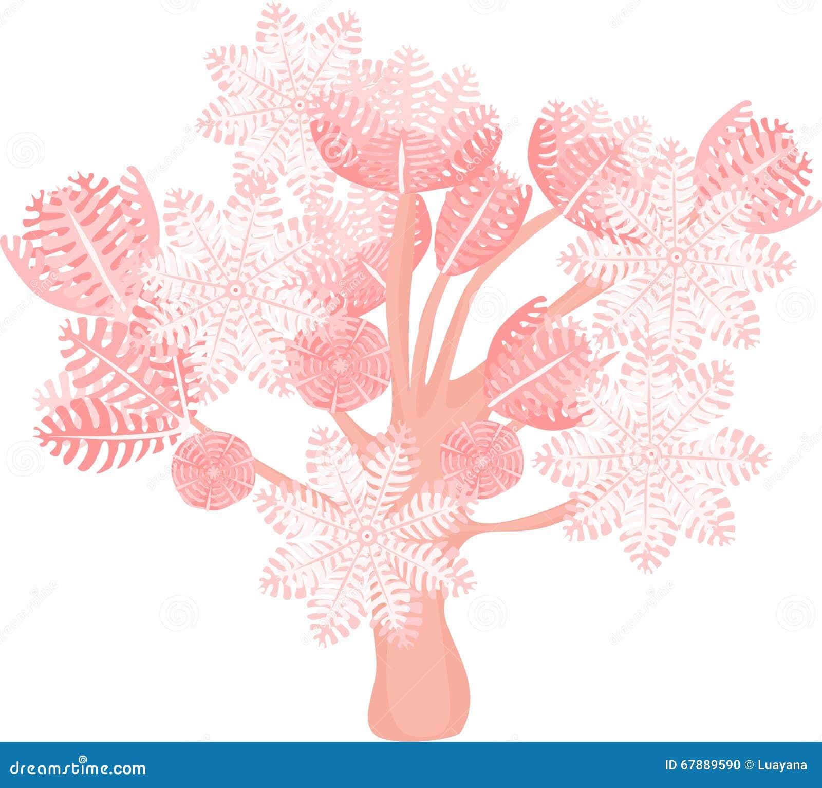 抽的齐尼亚珊瑚