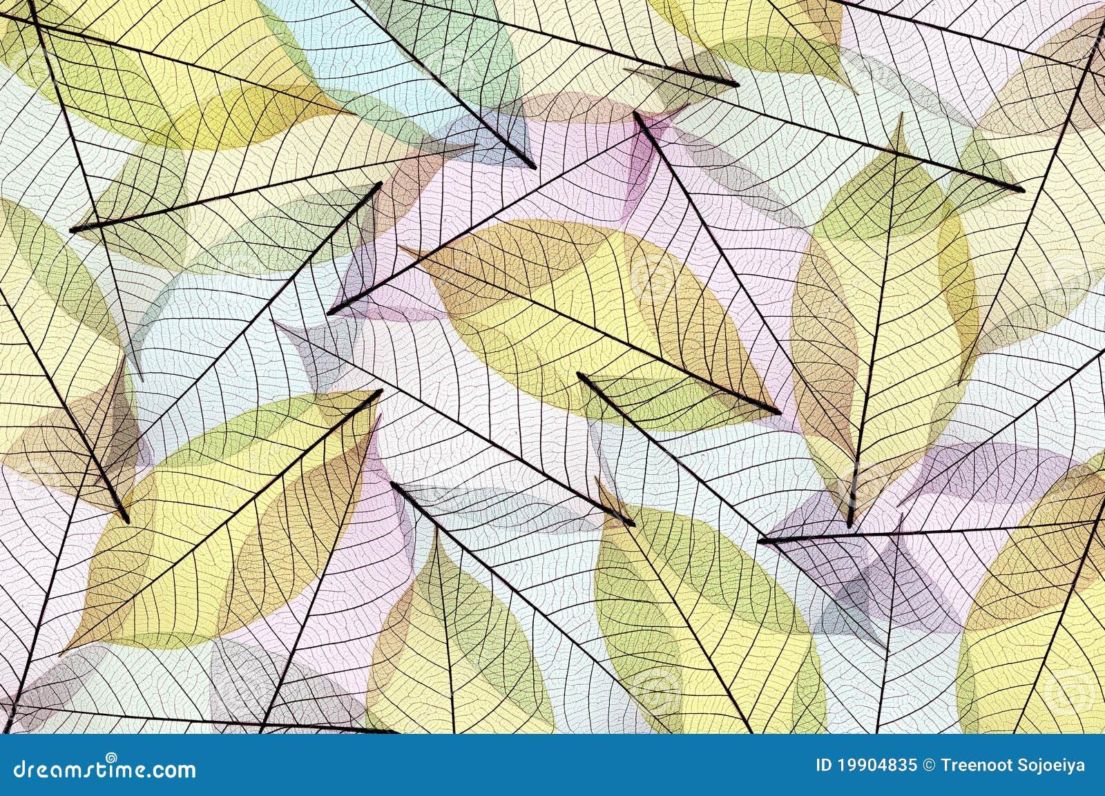 抽象叶子概要