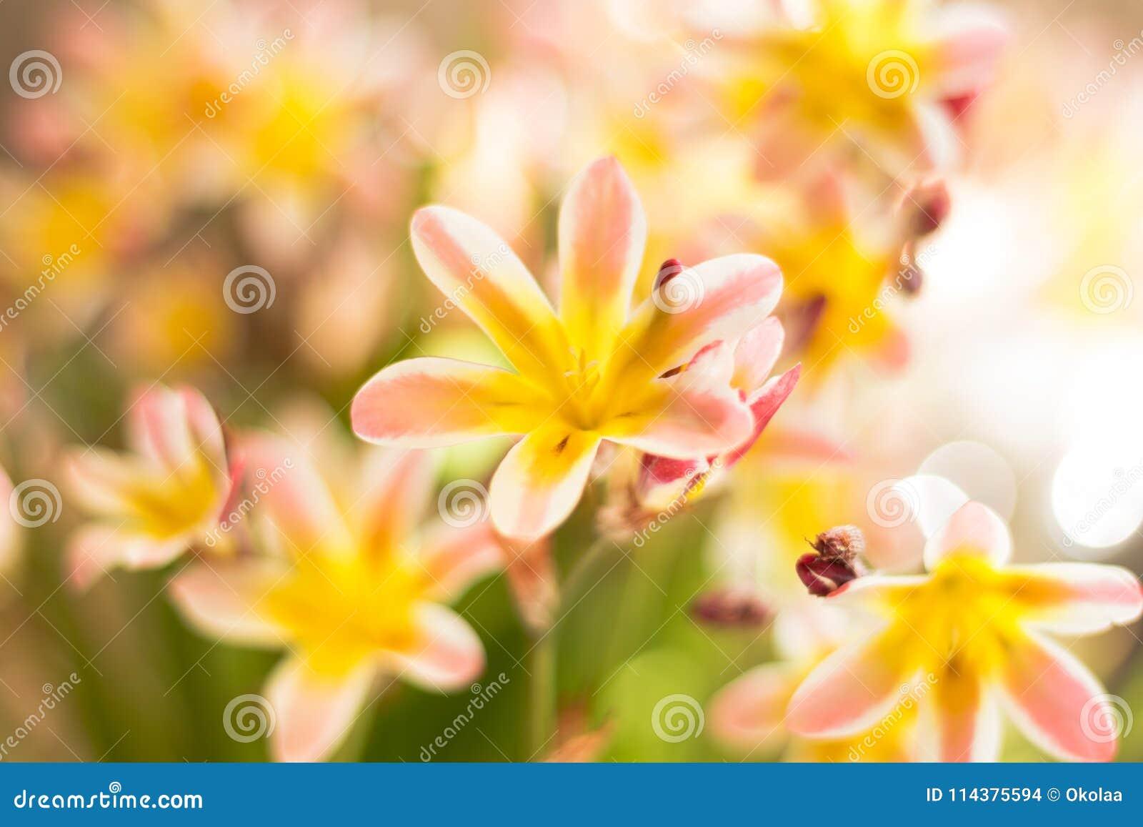 抽象背景五颜六色花卉