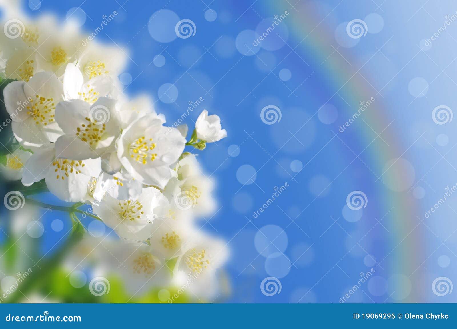 抽象背景春天