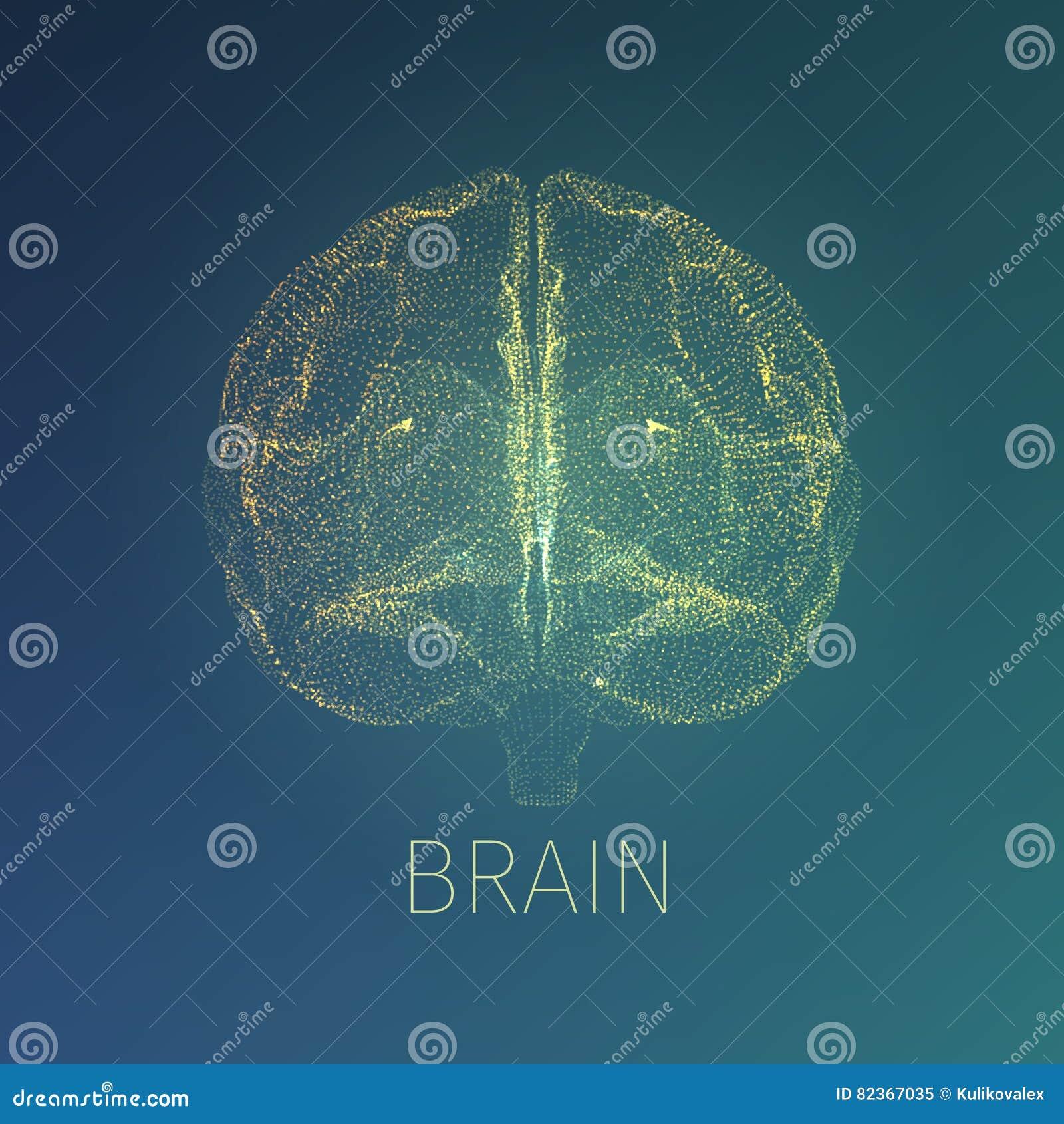 抽象脑子传染媒介例证 在头里面的X-射线视图 神经学横幅