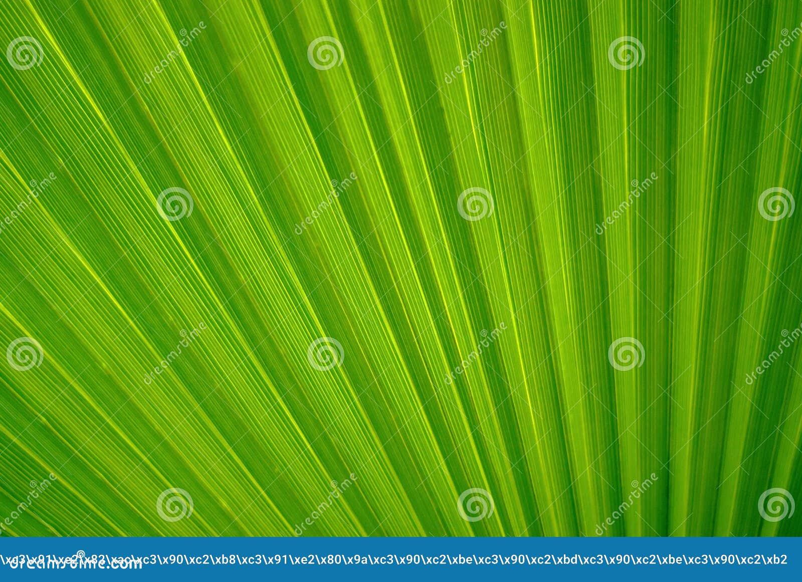 抽象花卉背景-棕榈的叶子的片段