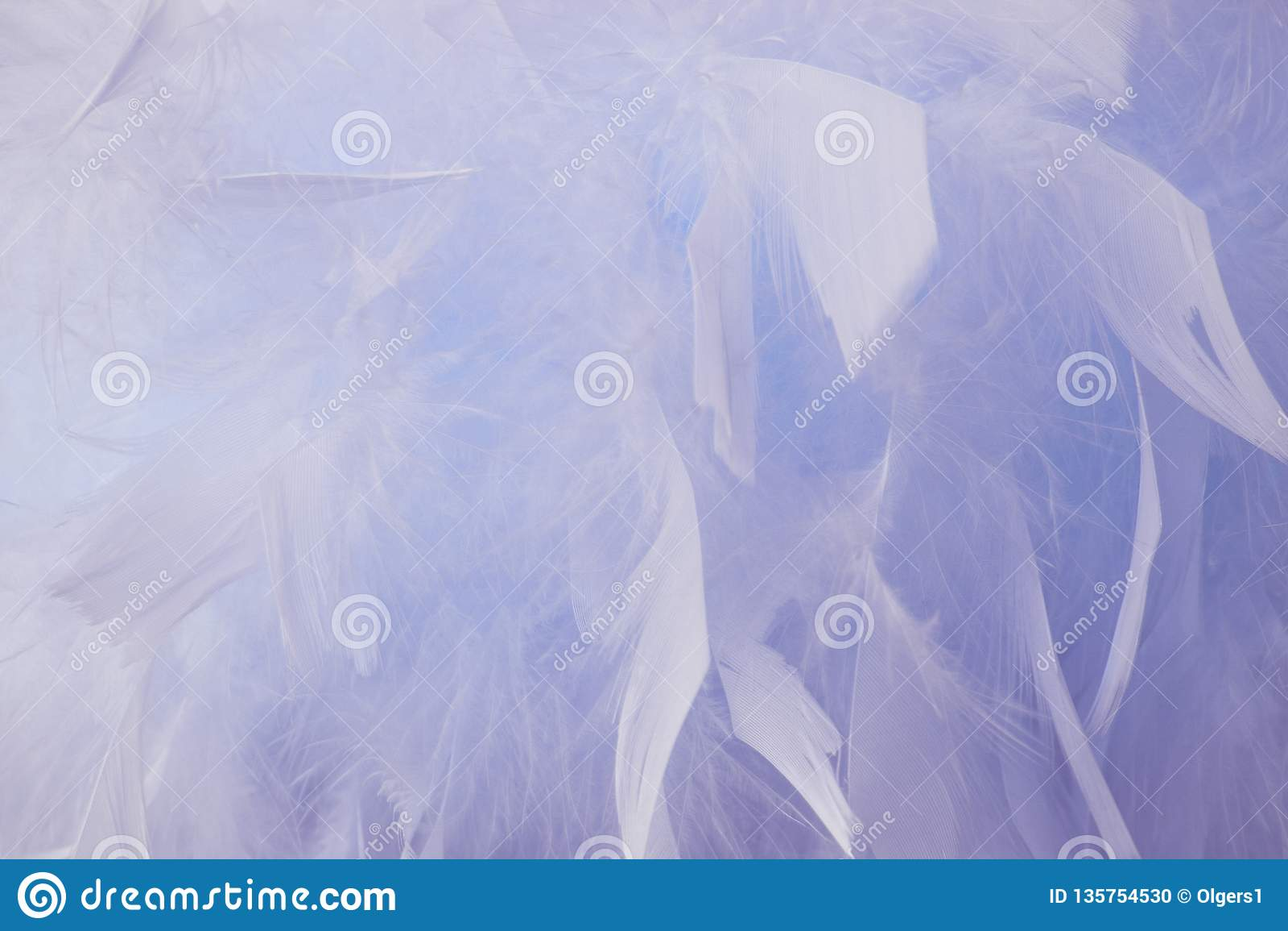 抽象蓝色口气羽毛背景 蓬松羽毛时尚设计葡萄酒漂泊样式柔和的淡色彩纹理