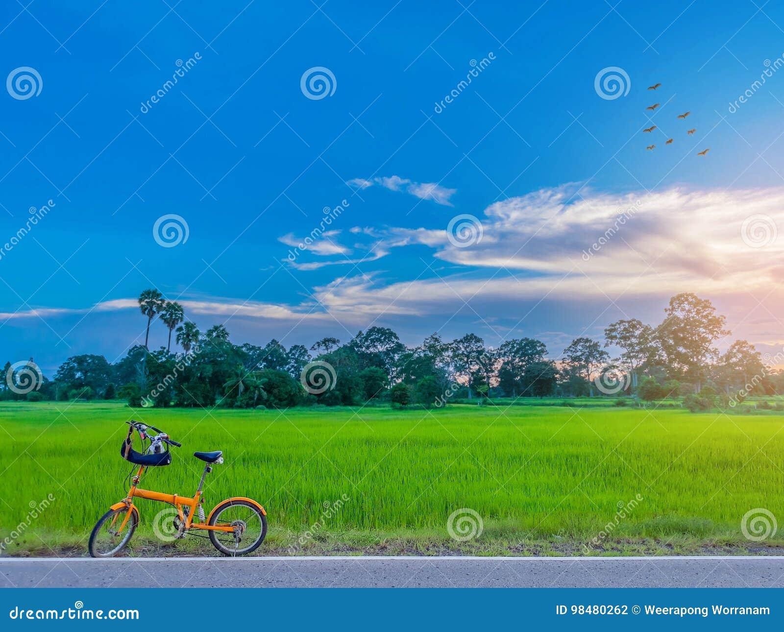 抽象软性被弄脏的和软的焦点与自行车、日落、美丽的天空和云彩的水稻领域剪影