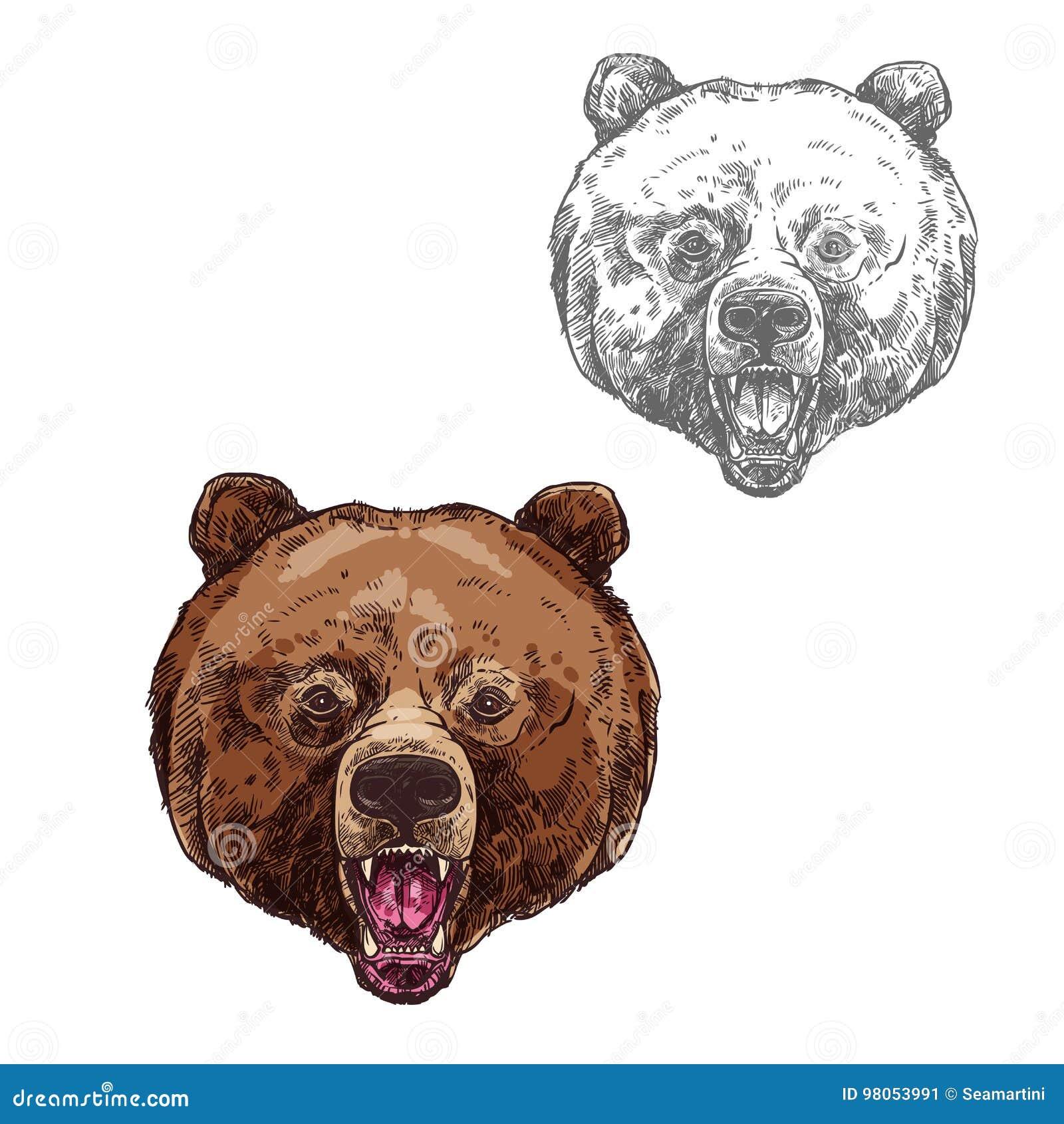 负担与野生北美灰熊头的被隔绝的剪影