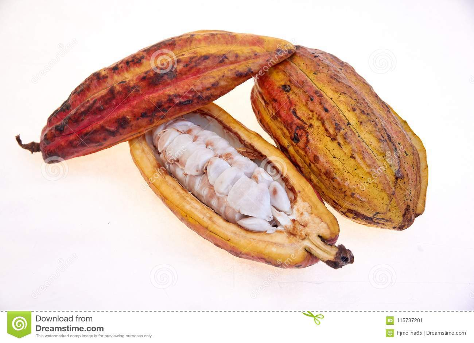 拉丁美洲各国的人品种可可粉果子