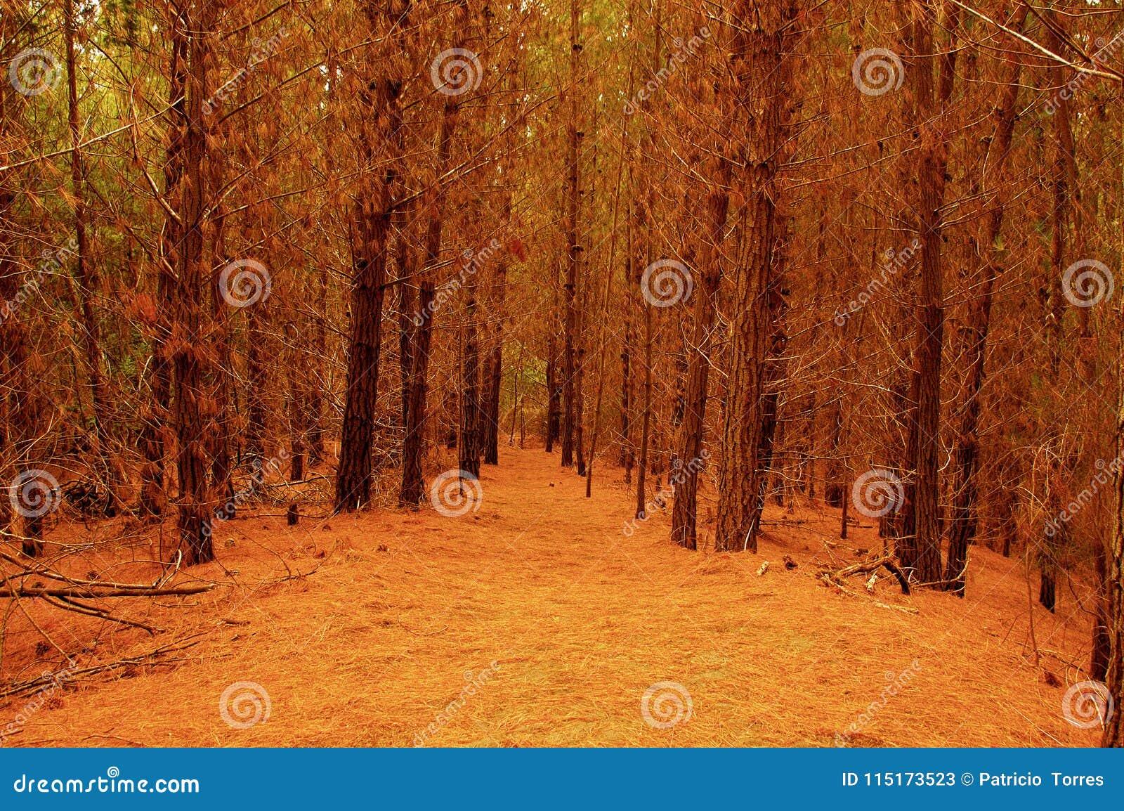 拉古纳Torca森林储备智利的沿海森林