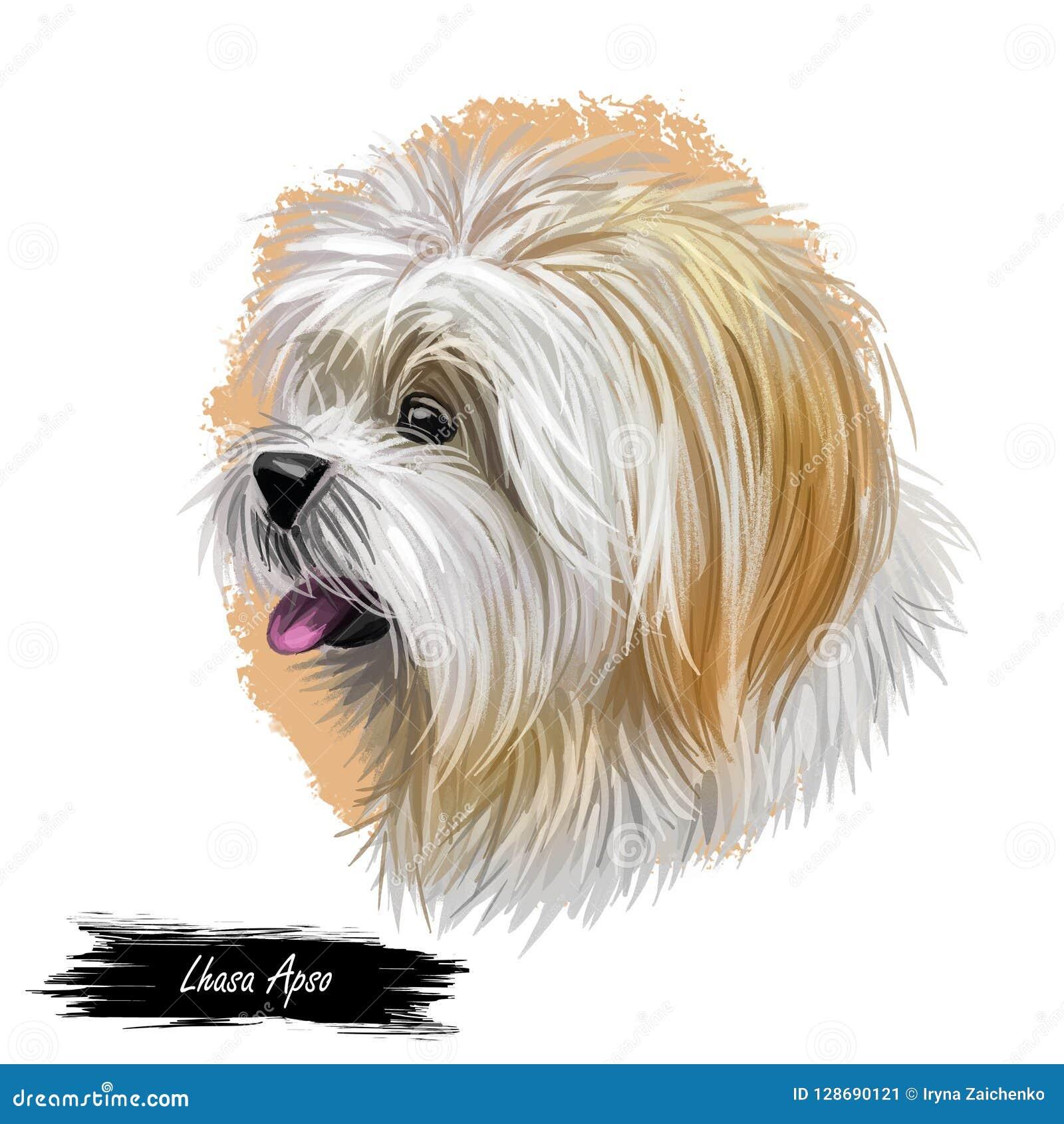 拉萨与白色毛皮,似犬数字艺术例证画象的apso宠物  发起于西藏的非体育狗品种