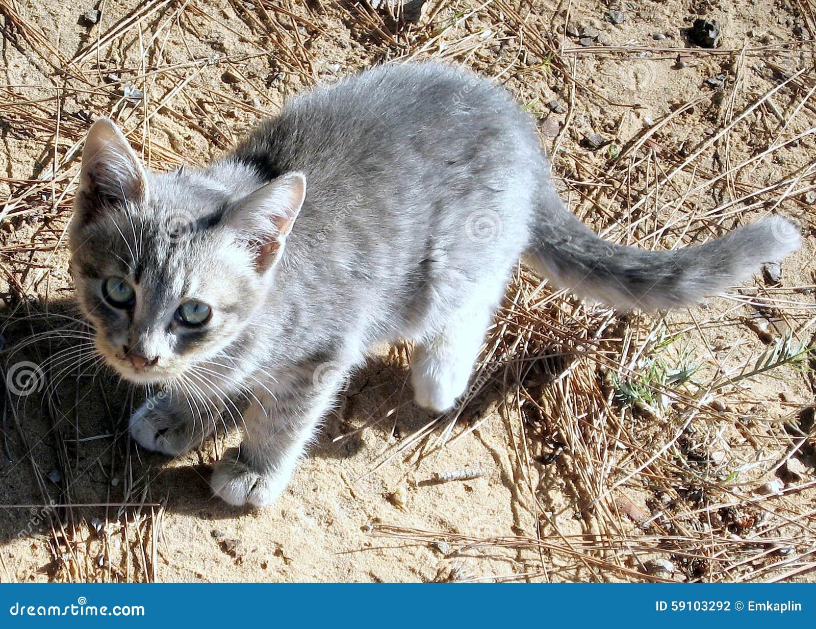 拉马干公园猫2007年