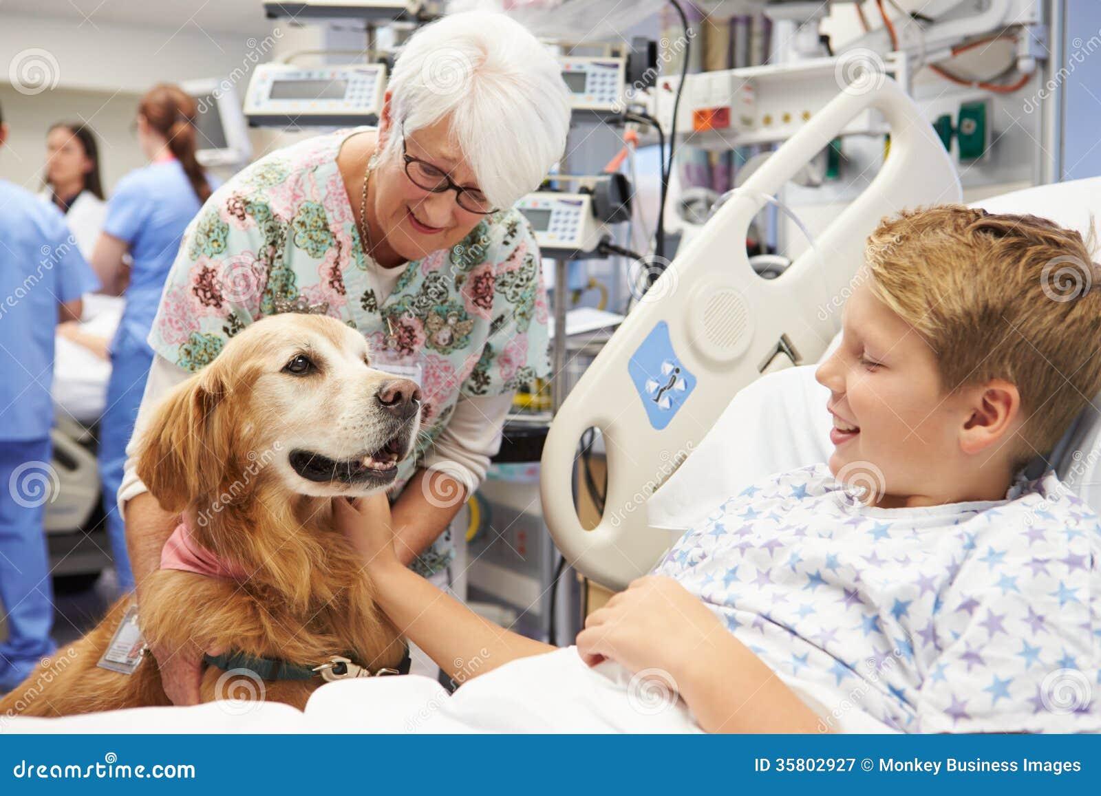 拜访年轻男性患者的疗法狗在医院