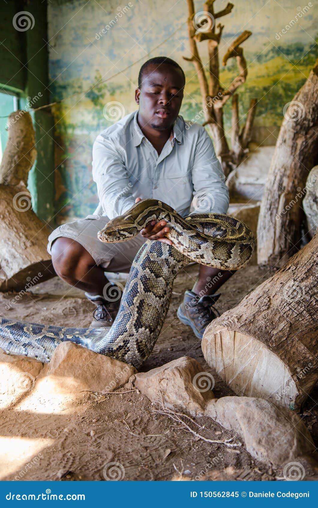 拿着一个大Python用他的手的人显示它对游人 PheZulu文化村庄,南非