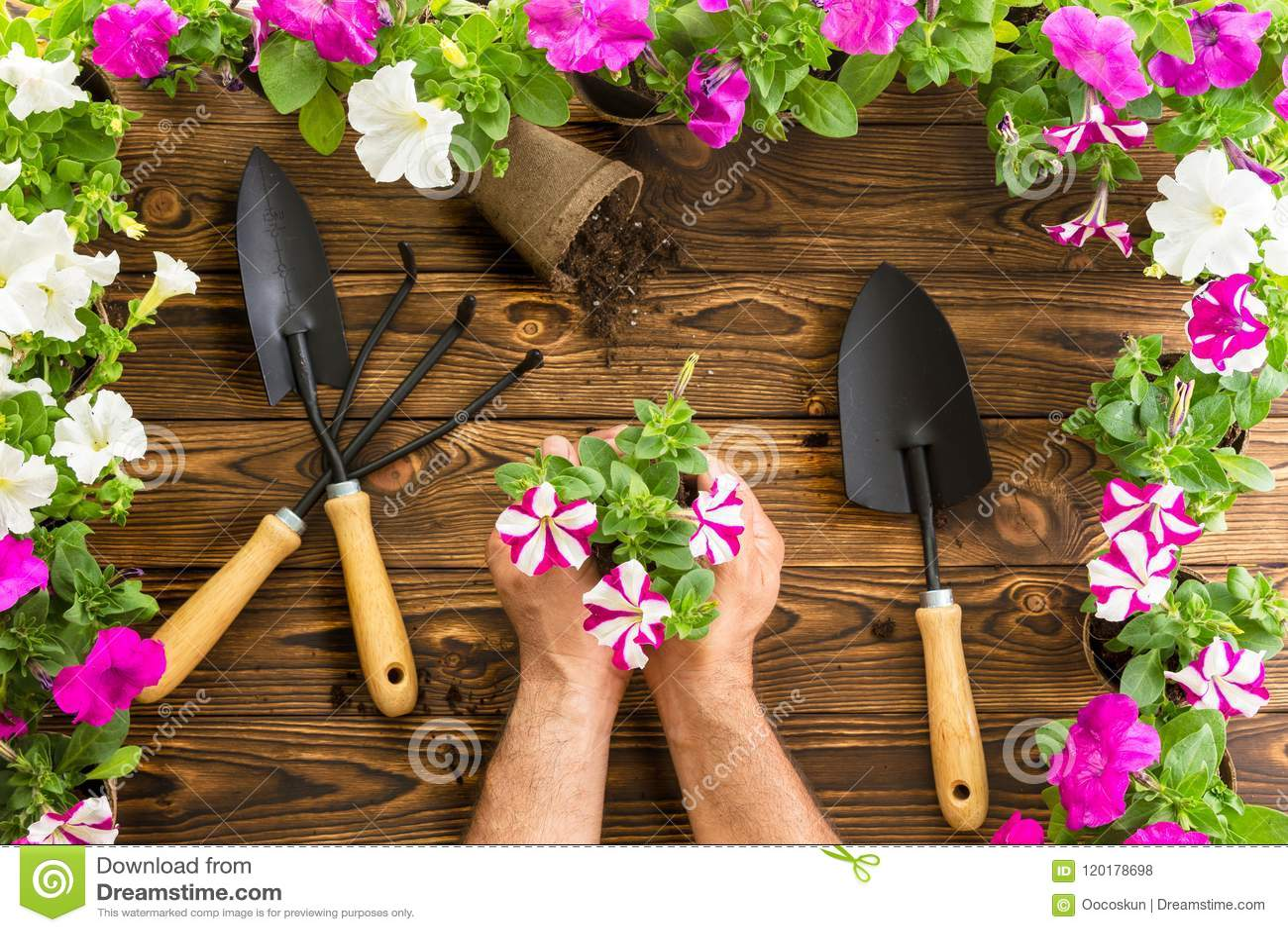 拿着一束春天喇叭花的人或花匠