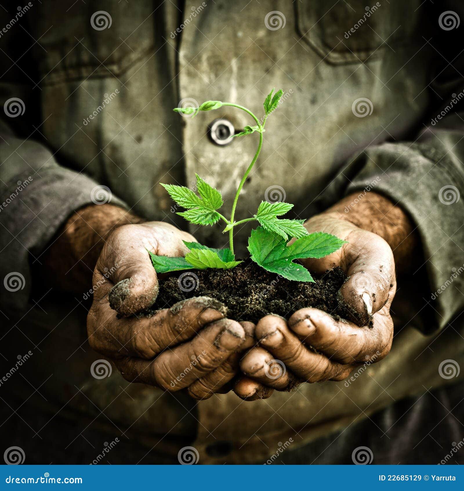 拿着人的绿色现有量种植年轻人