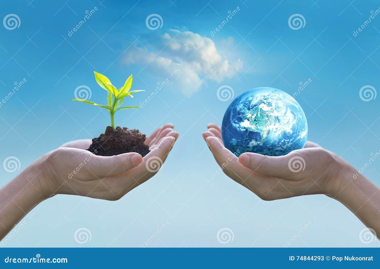 拿着地球和绿色树在手上,世界环境日概念,保存的生长年轻树