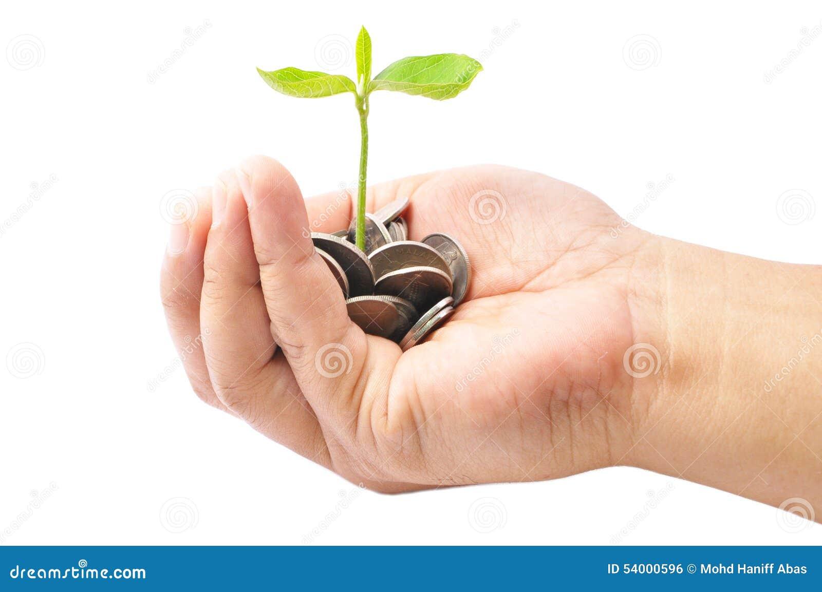 拿着堆硬币和一棵小植物的手发芽从Th