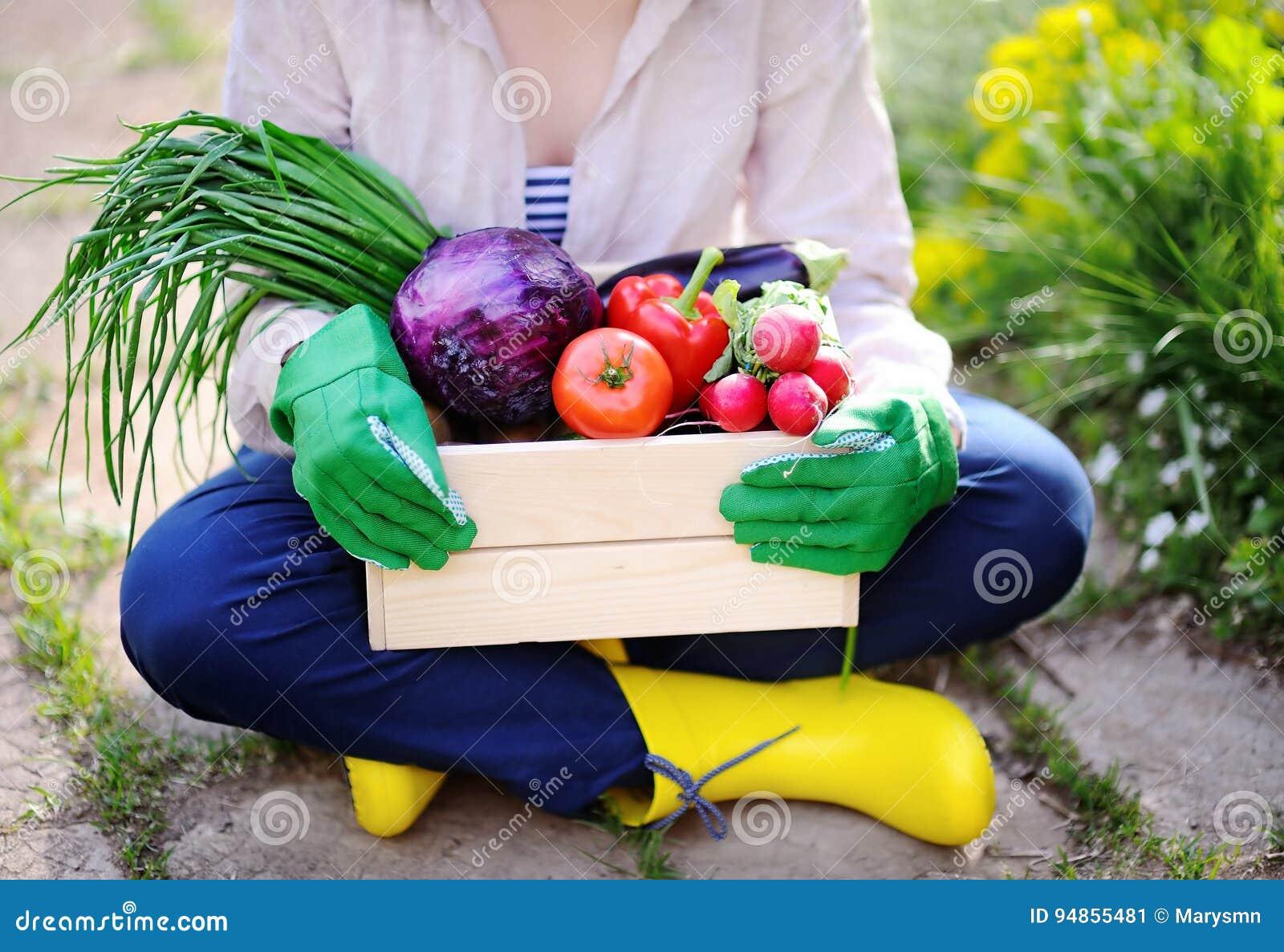 拿着有新鲜的有机菜的花匠木板箱从农场