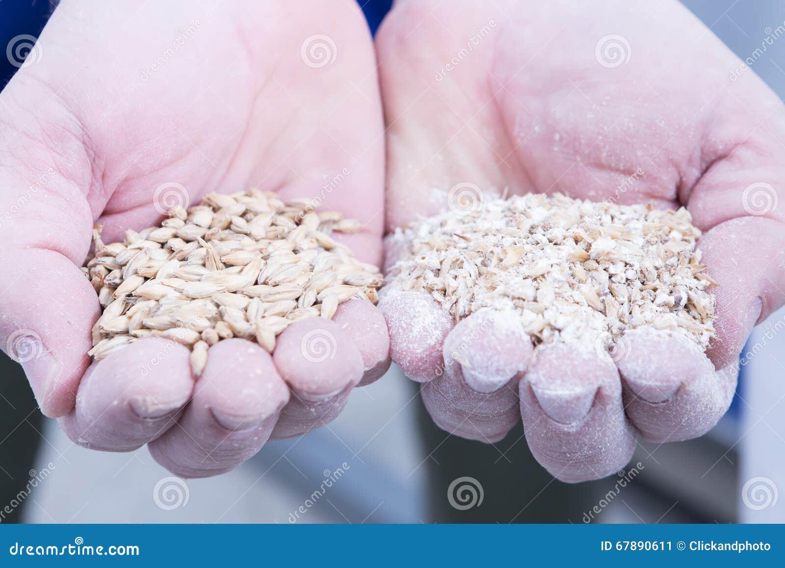 拿着极少数麦芽种子的人