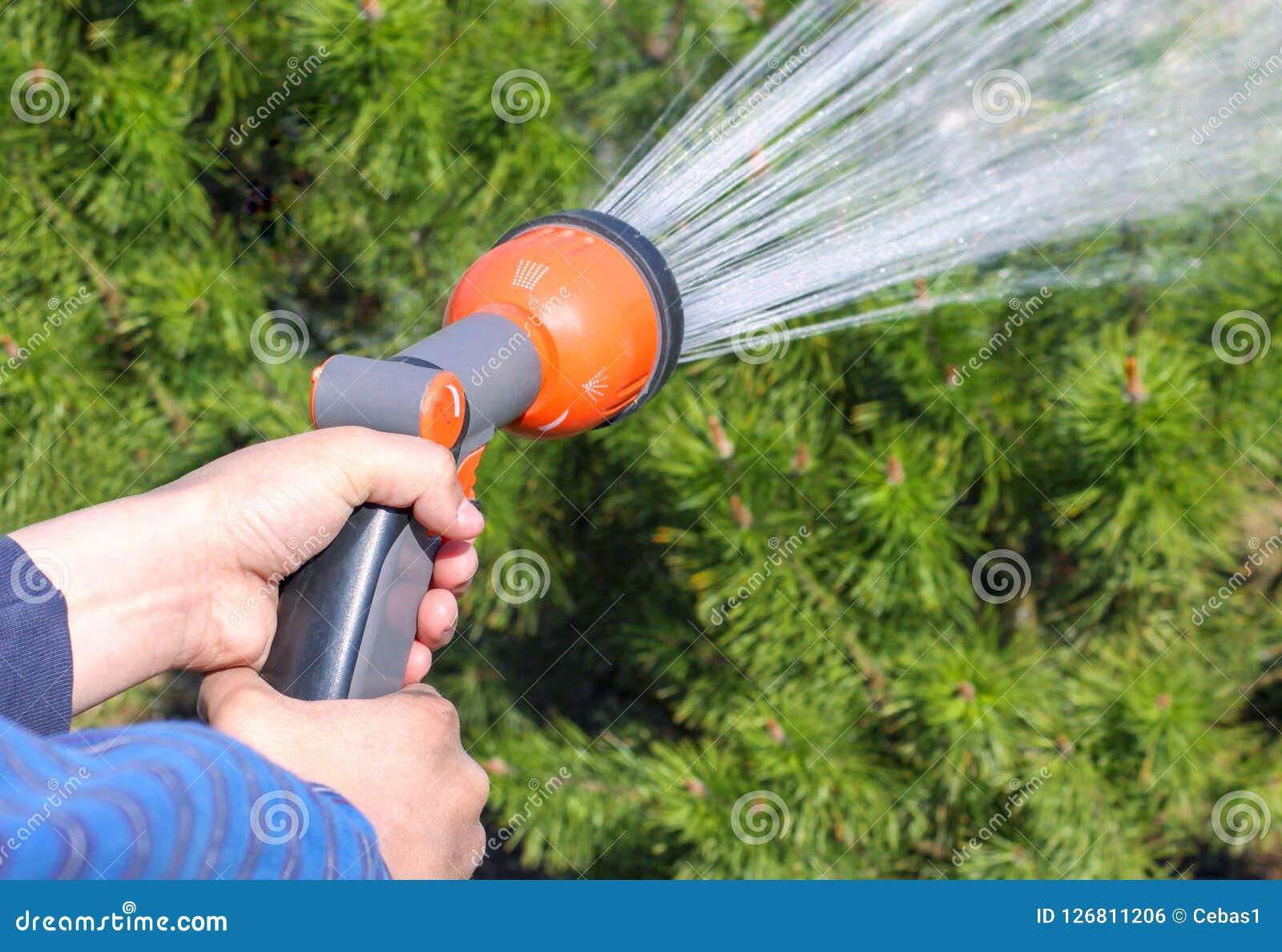 拿着水喷水隆头和浇灌绿色庭院的人的手