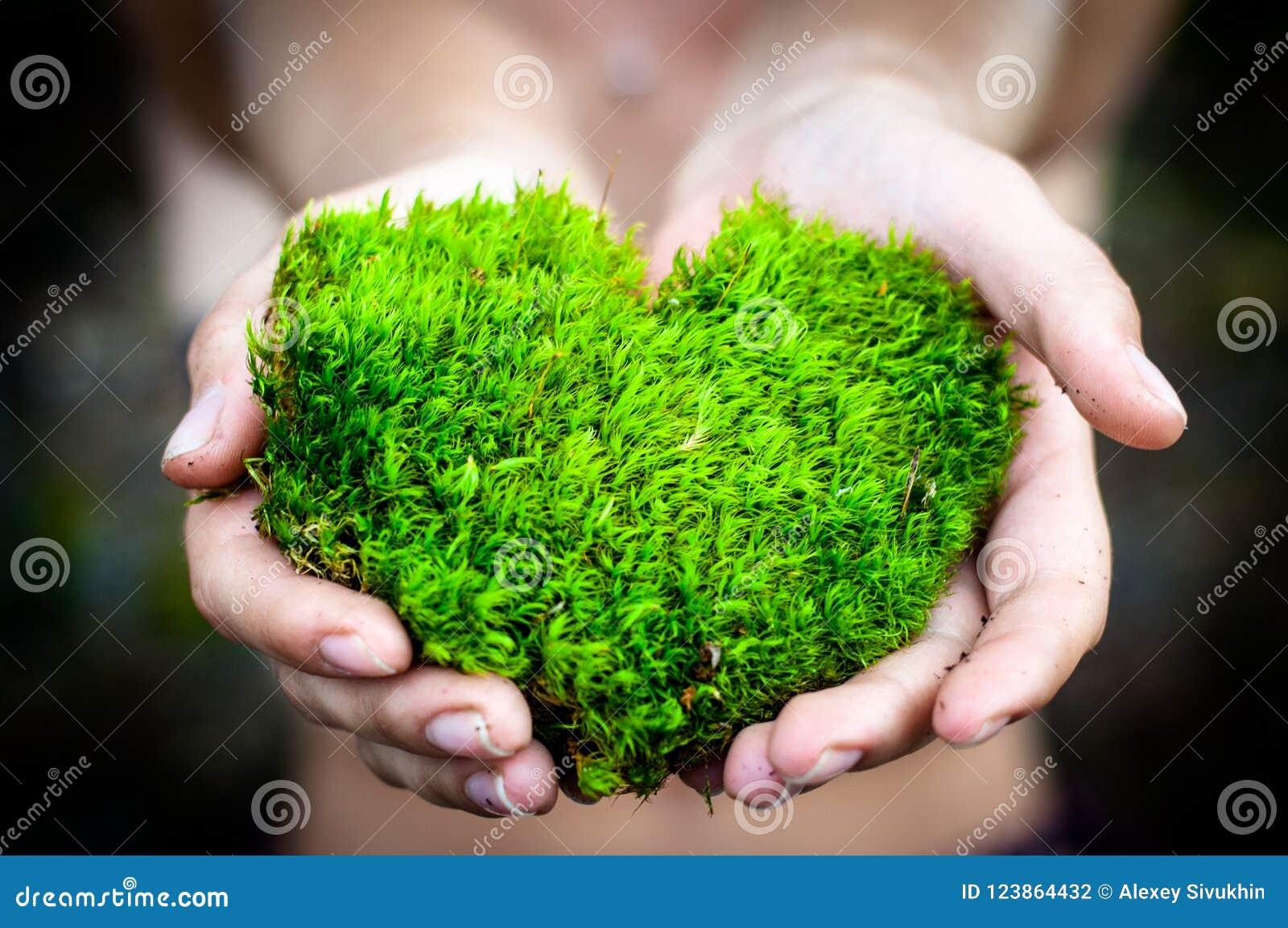 拿着绿色心形的树爱自然的手拯救世界愈合世界环境保存