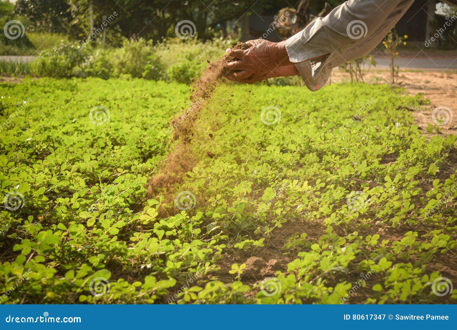 拿着肥料的老手花匠