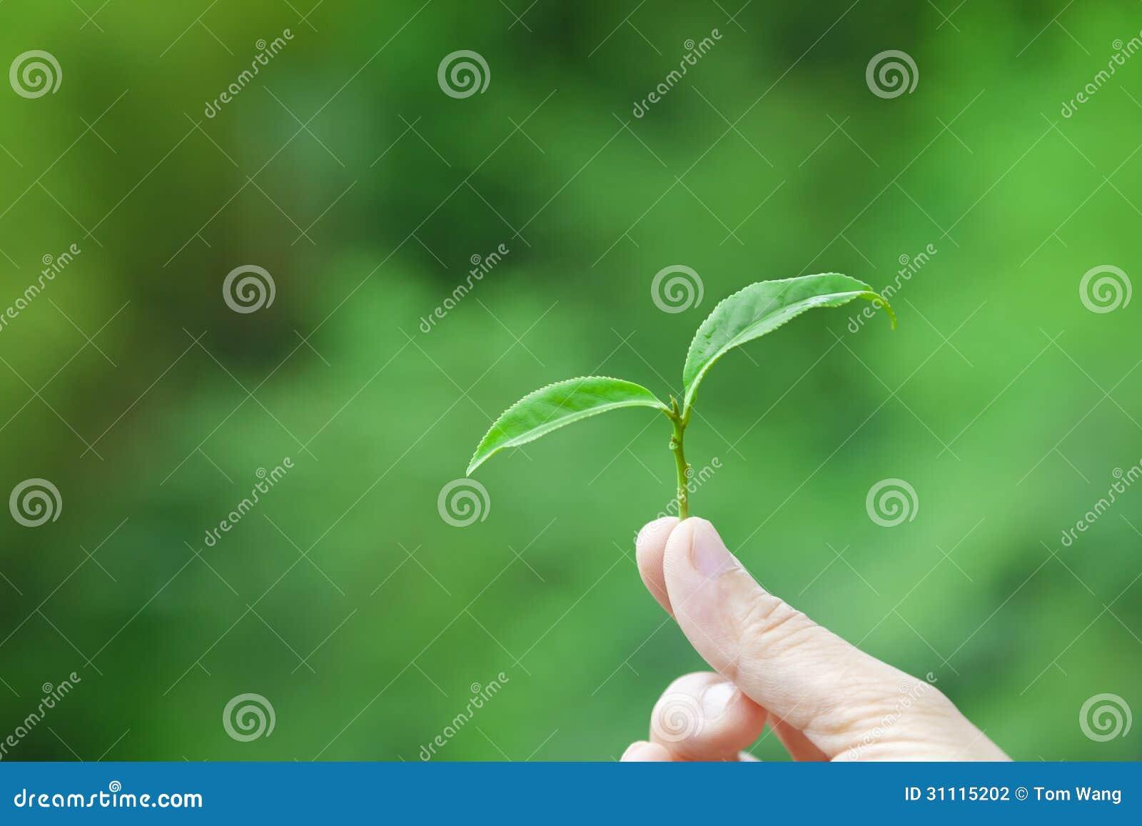 背景 壁纸 绿色 绿叶 树叶 植物 桌面 1300_957图片