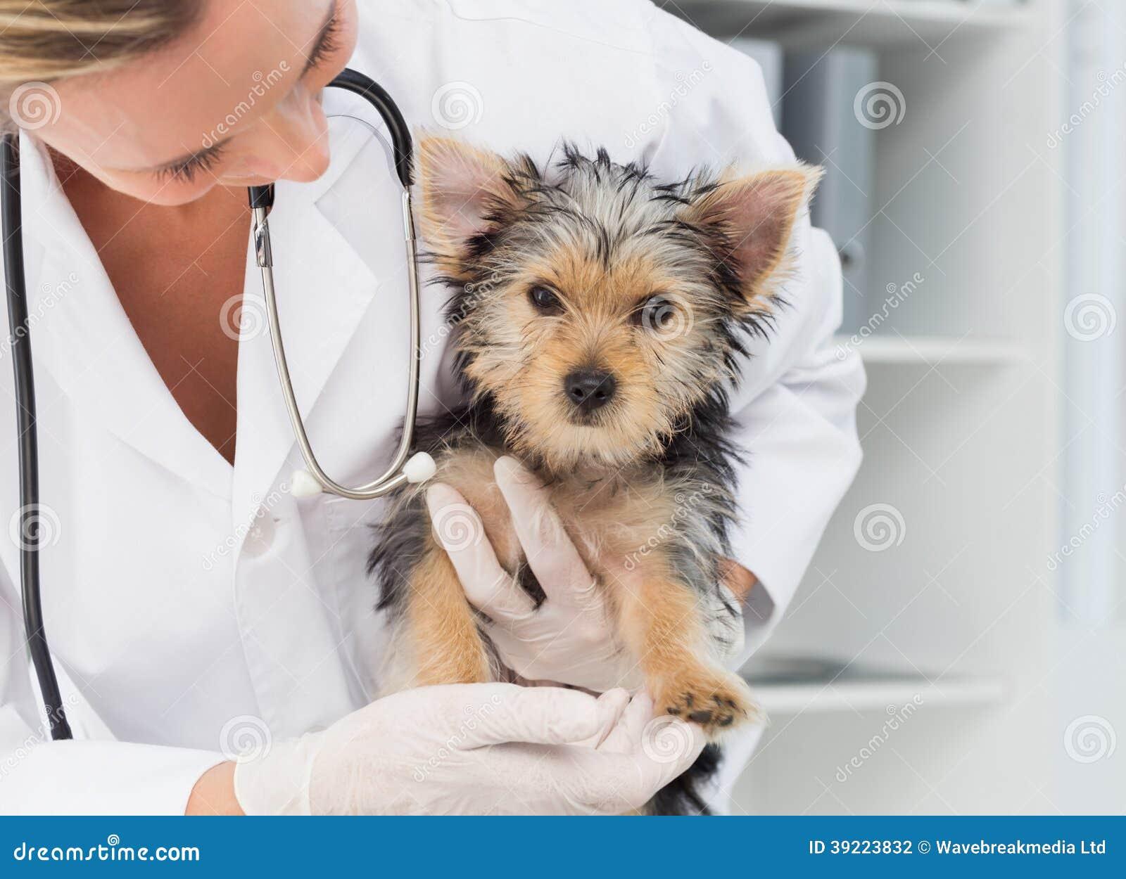 拿着逗人喜爱的小狗的狩医