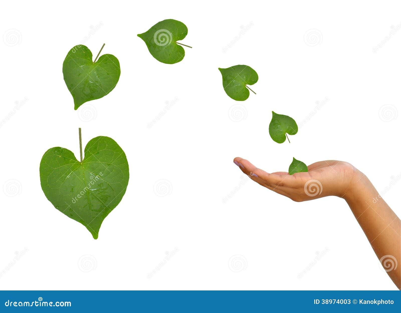拿着从叶子的手心脏图片