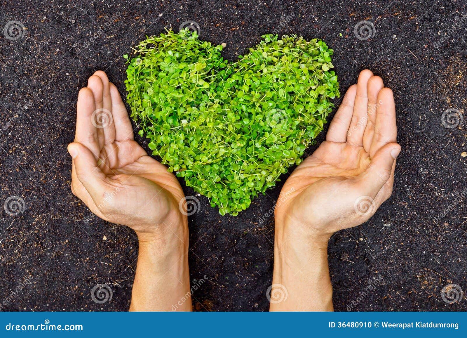拿着绿色心形的树的手