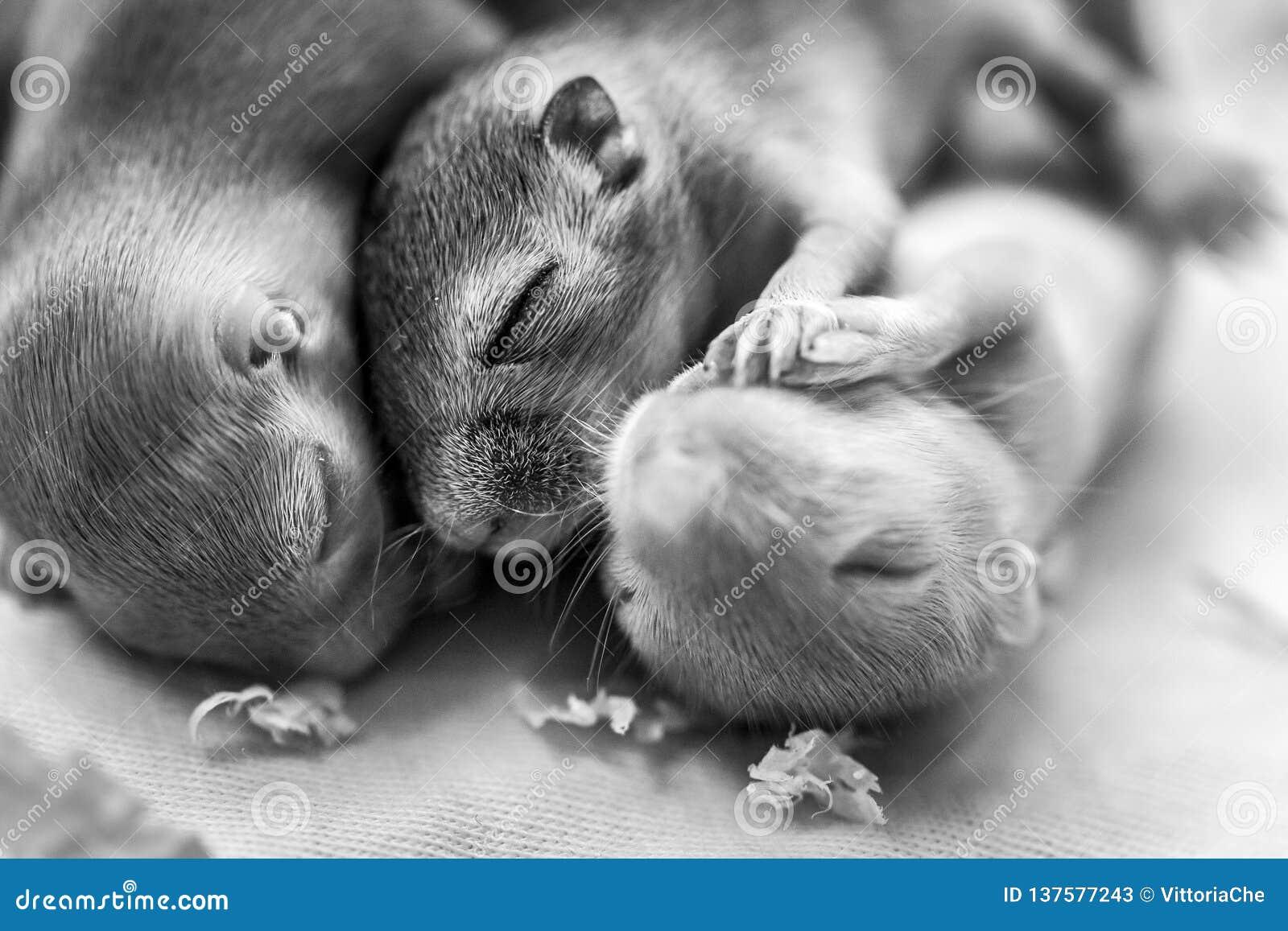 挤作一团的一点逗人喜爱老鼠婴孩睡觉 新的发行被重新设计的美元钞票